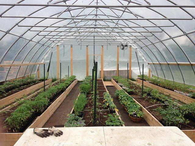Interior of Smart Farm's hoop house growing happy, healthy organic vegetable seedlings.