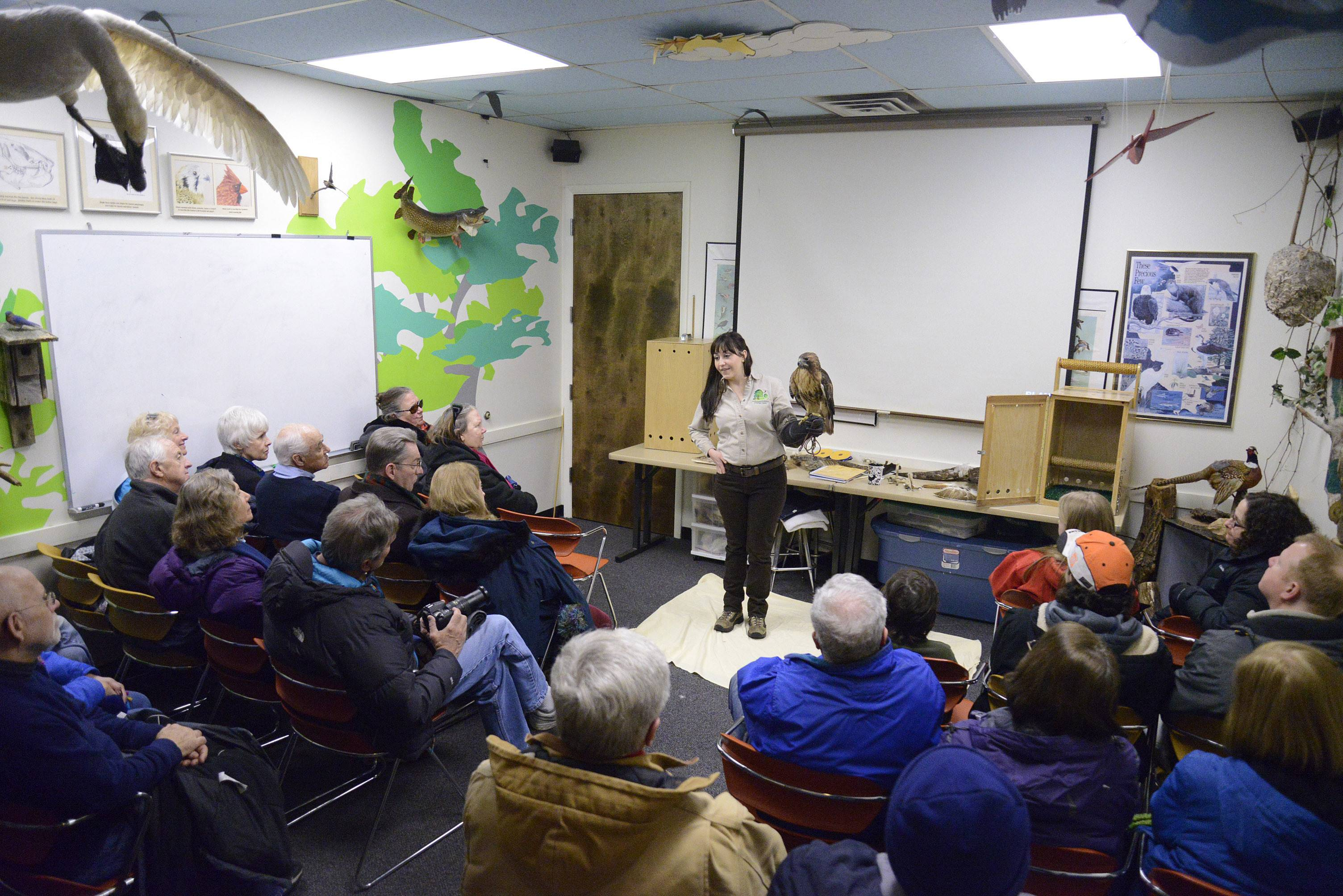 "Naturalist Stephanie Touzalin presents Henna, a Red Tailed hawk to visitors Sunday during the ""Big, Bad and Beautiful: Your Backyard Birds of Prey"" presentation at Willowbrook Wildlife Center in Glen Ellyn. Henna and a Great Horned owl named Andre were shown to 30 people who gathered to learn about the similarities and differences of the large birds of prey."