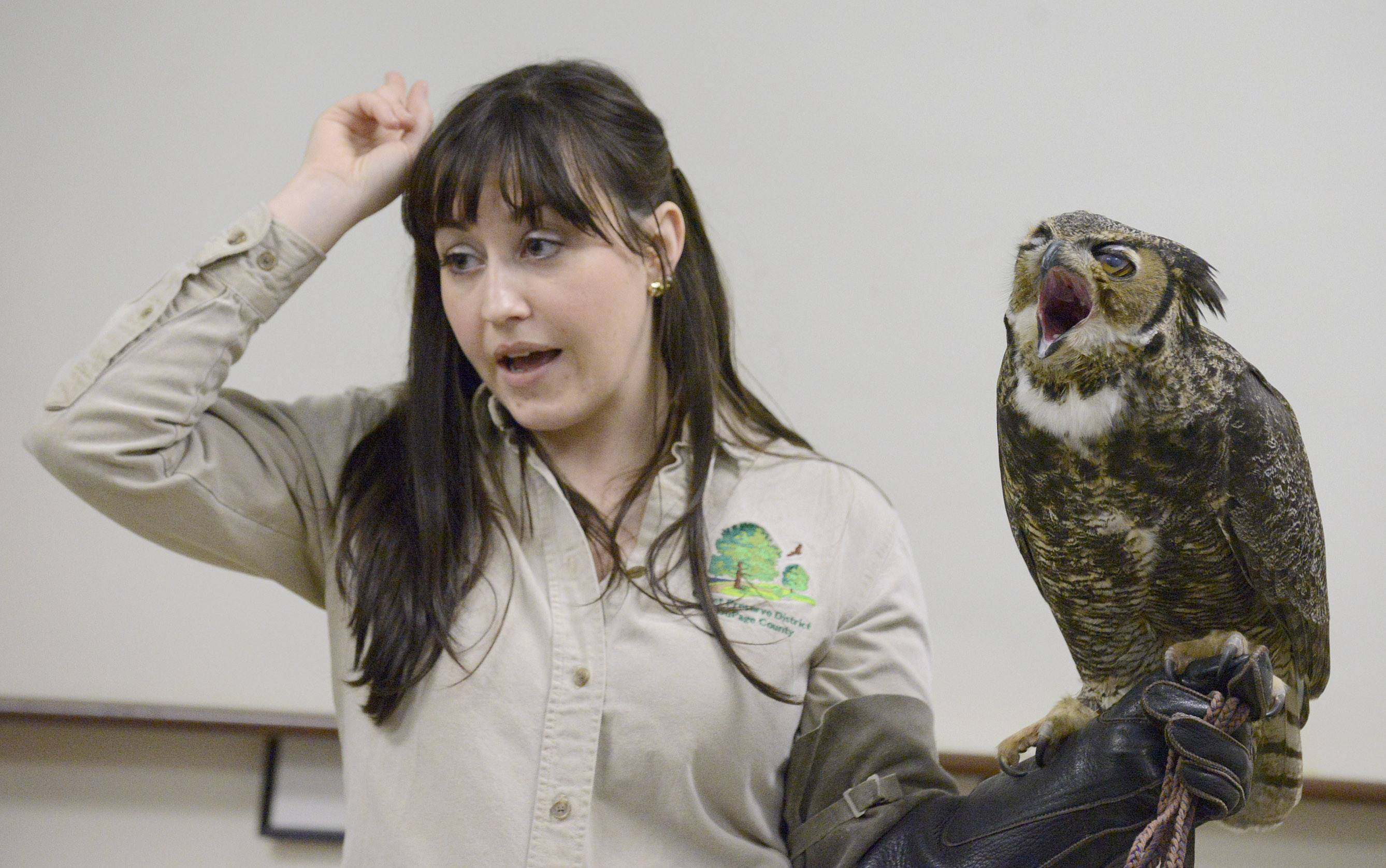 "Andre, a Great Horned owl, lets out a big yawn while naturalist Stephanie Touzalin talks about the ear tufts on his head Sunday during the ""Big, Bad and Beautiful: Your Backyard Birds of Prey"" presentation at Willowbrook Wildlife Center in Glen Ellyn. Andre and a Red Tailed hawk named Henna were shown to 30 people who gathered to learn about the similarities and differences of the large birds of prey."