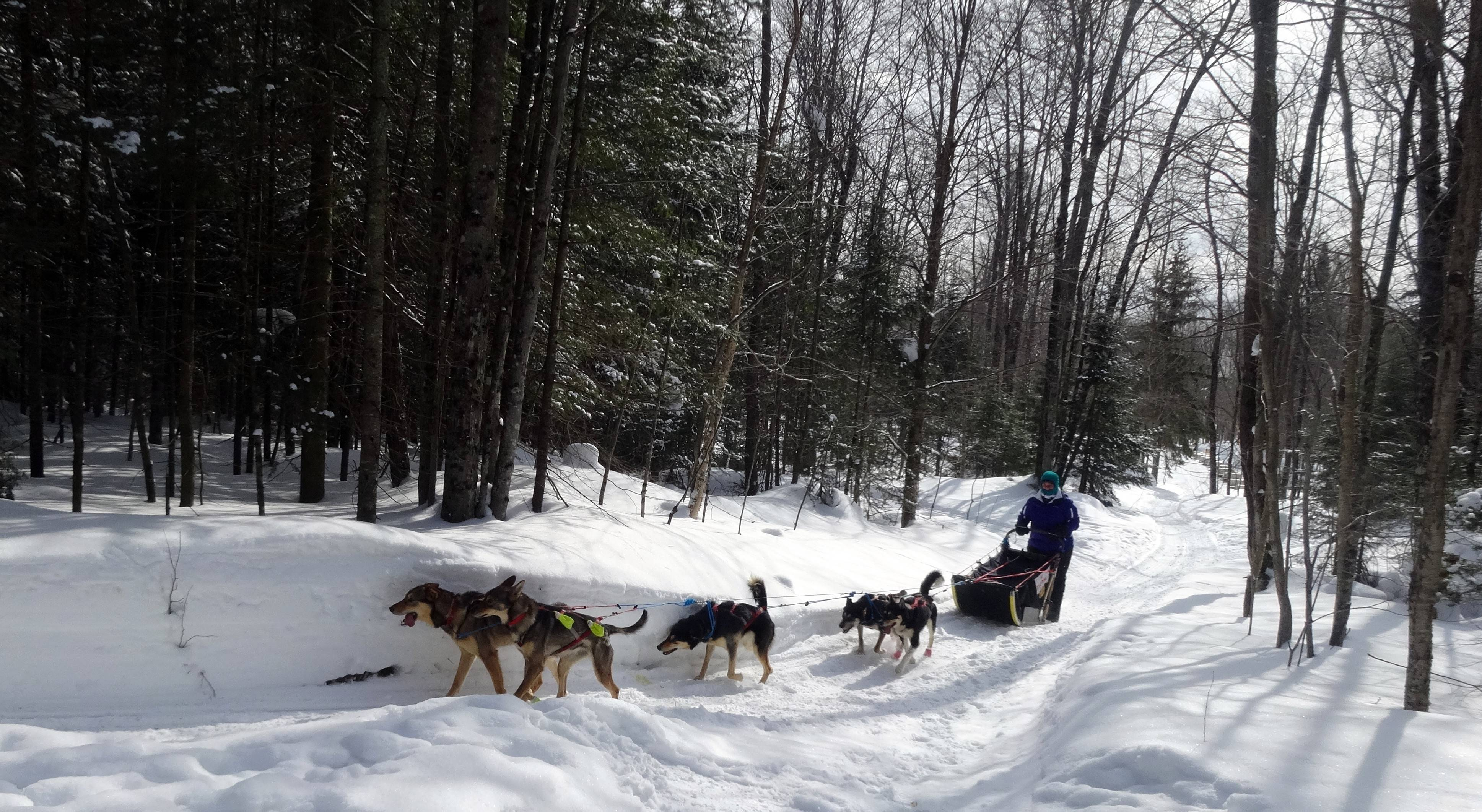 Zipping through Michigan's Upper Peninsula on a dog sled, Liz Kerr of Mount Prospect says she didn't mind the subzero cold during the exhilarating trip.