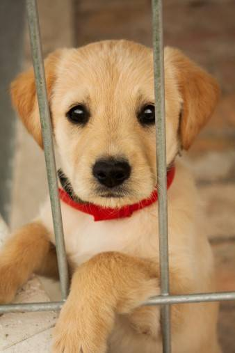 Chicago forbids pet shops from using puppy mills