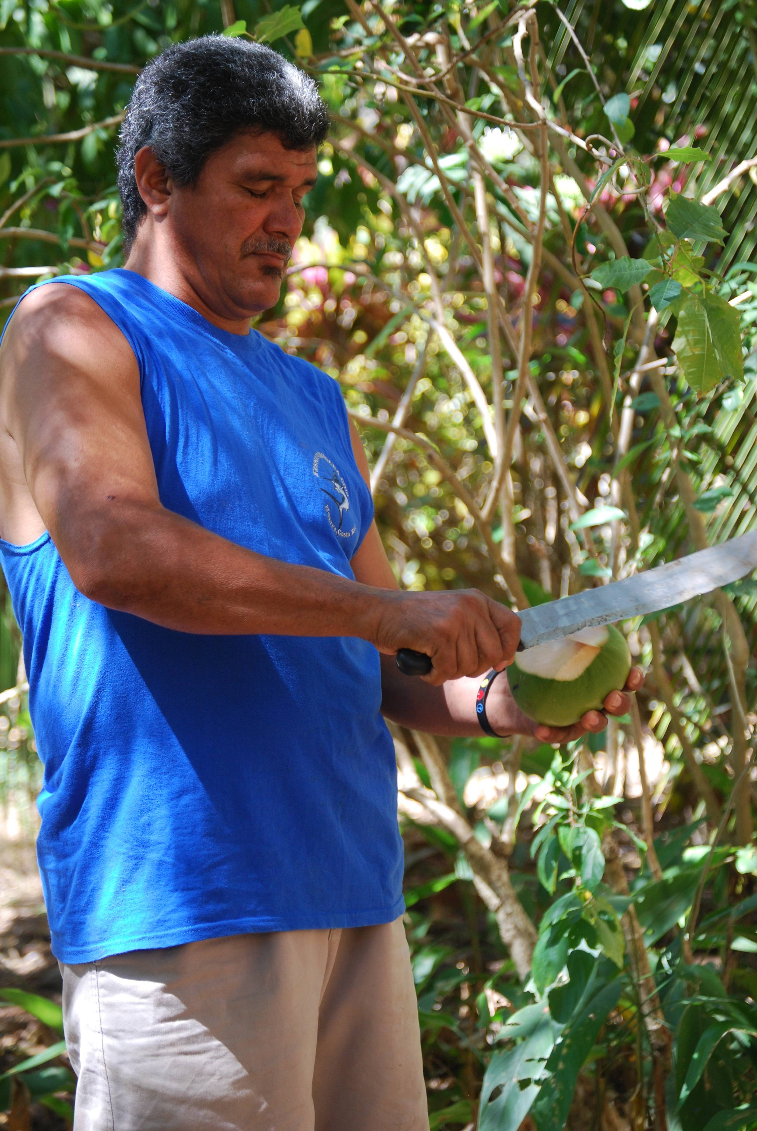 Tour guide Eduardo Hernandez chops the top off a green coconut, which he then gives to his guests to drink from.