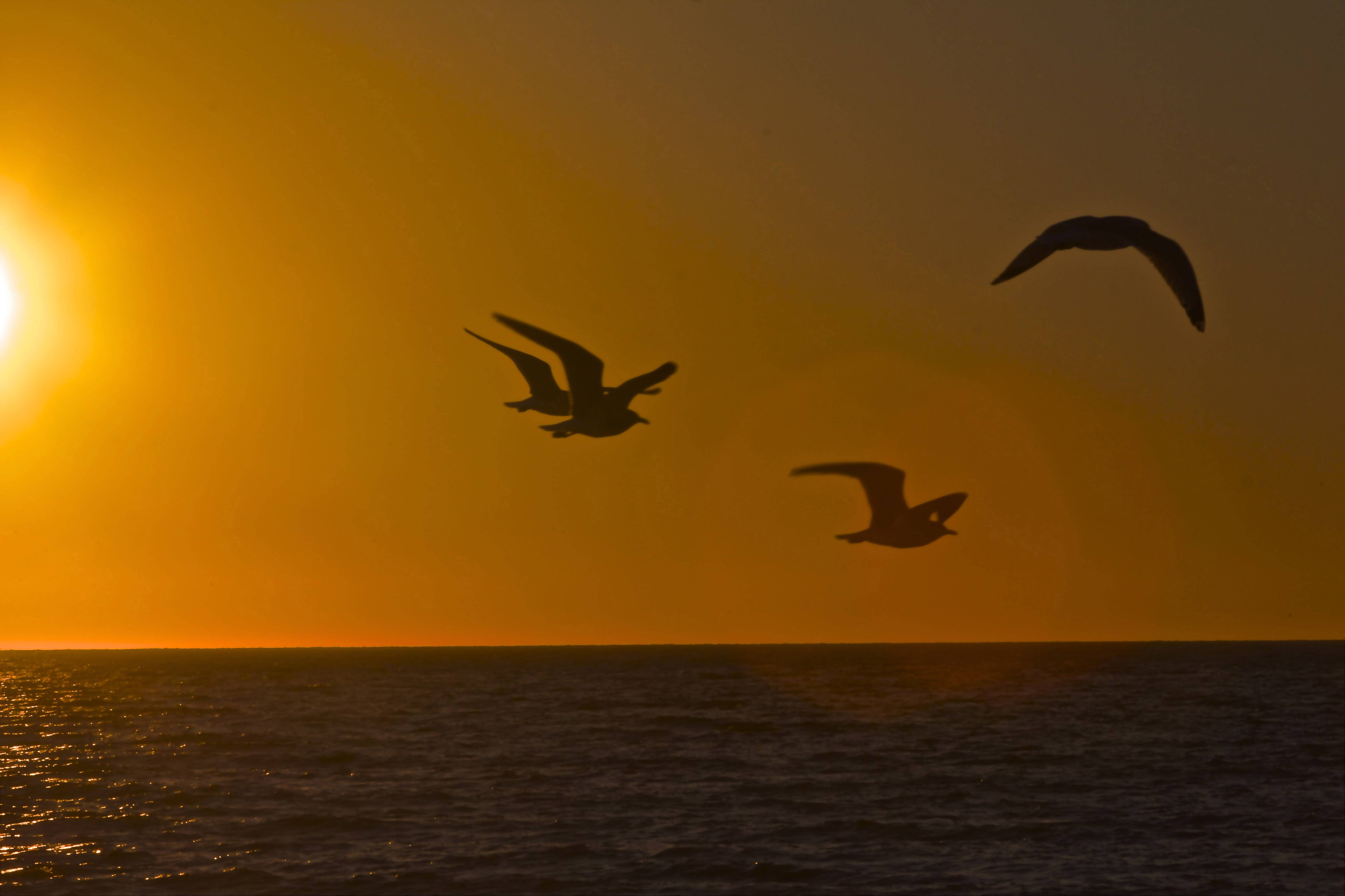 A group of gulls are in silhouette against the orange sky on Siesta Key, Florida a last month.
