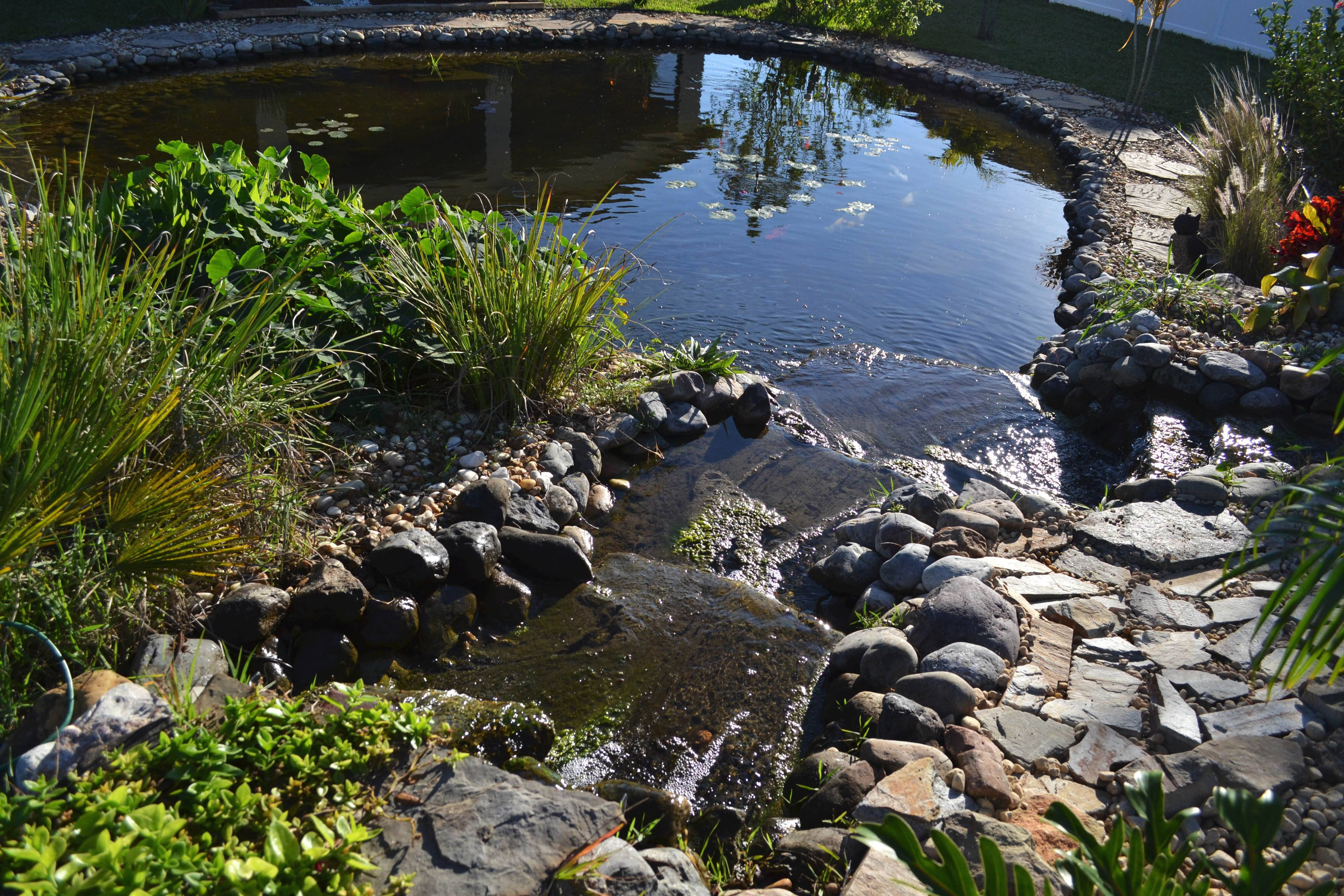 Sonny Alansky designed this pond for the backyard of his home in Rockledge, Fla. It measures roughly 37 feet in diameter, has three waterfalls and 14 koi fish.