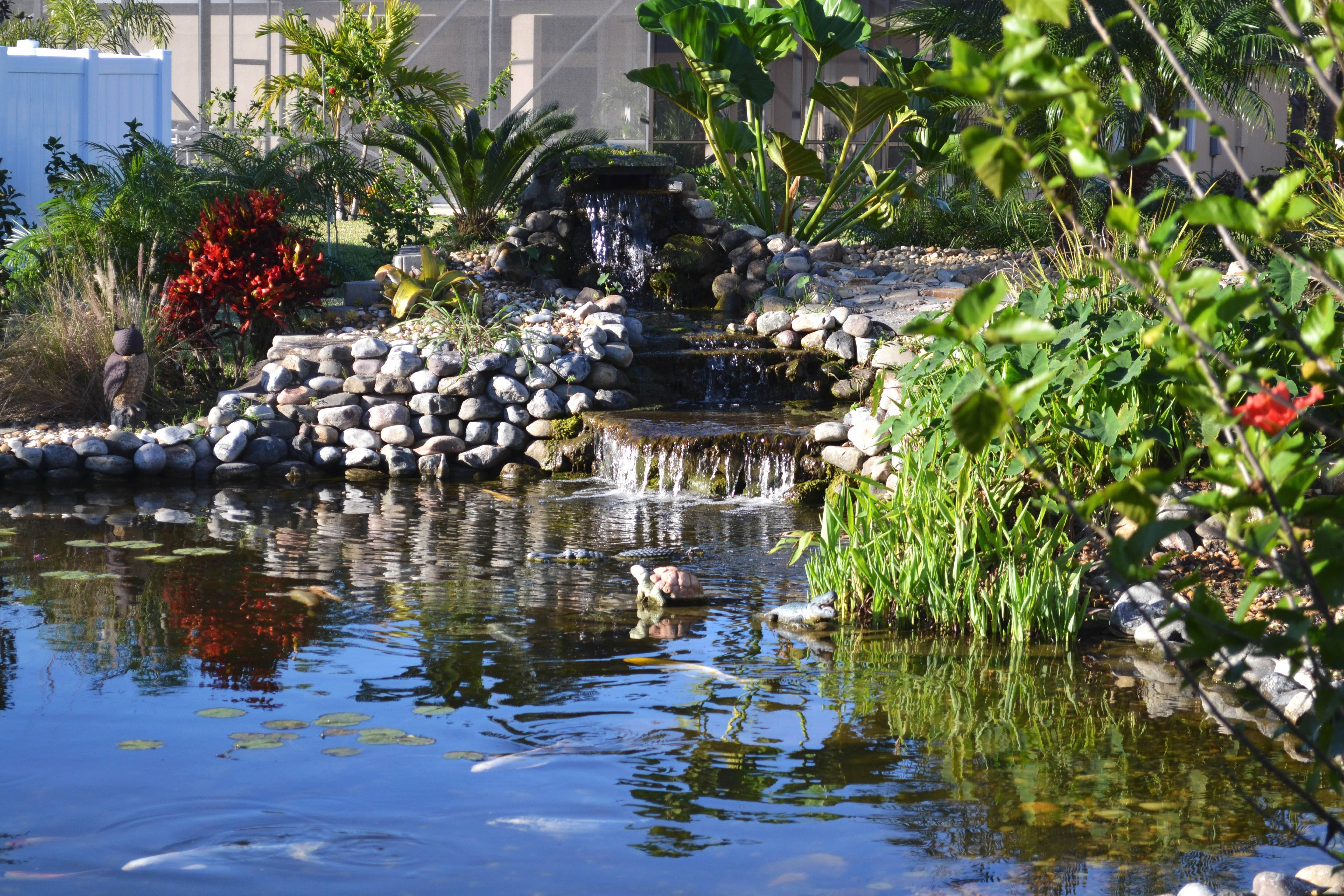 Fourteen koi fish call this Florida pond home. Backyard ponds, which range from small and simple to meandering and ornate, can become a passion for many gardeners.
