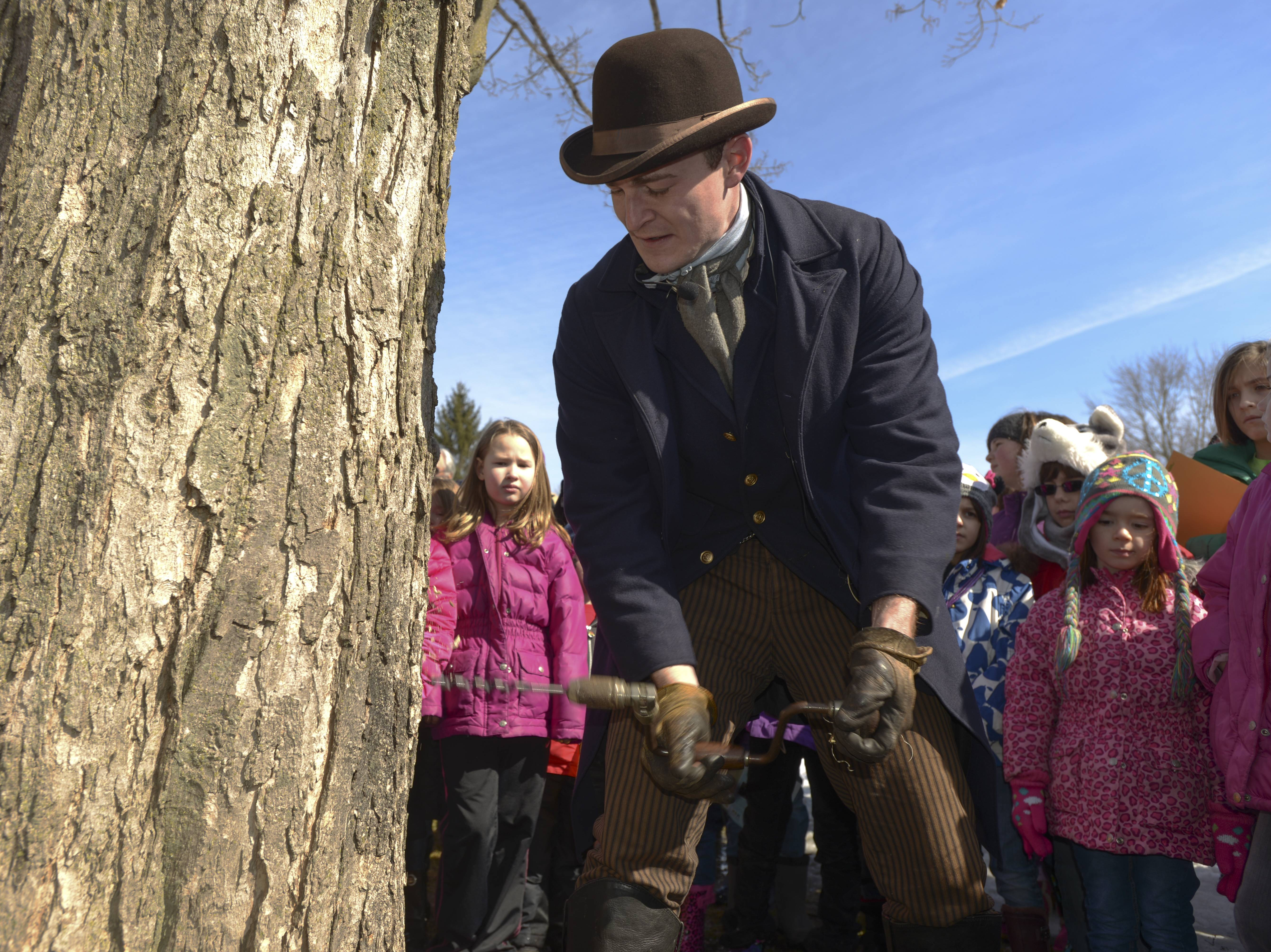 Justin Stech, an educator at the Naper Settlement Museum in Naperville, demonstrates how to tap a maple tree to gather sap to make it into maple syrup. Dozens visited the settlement Sunday for its annual Maple Sugaring Days.