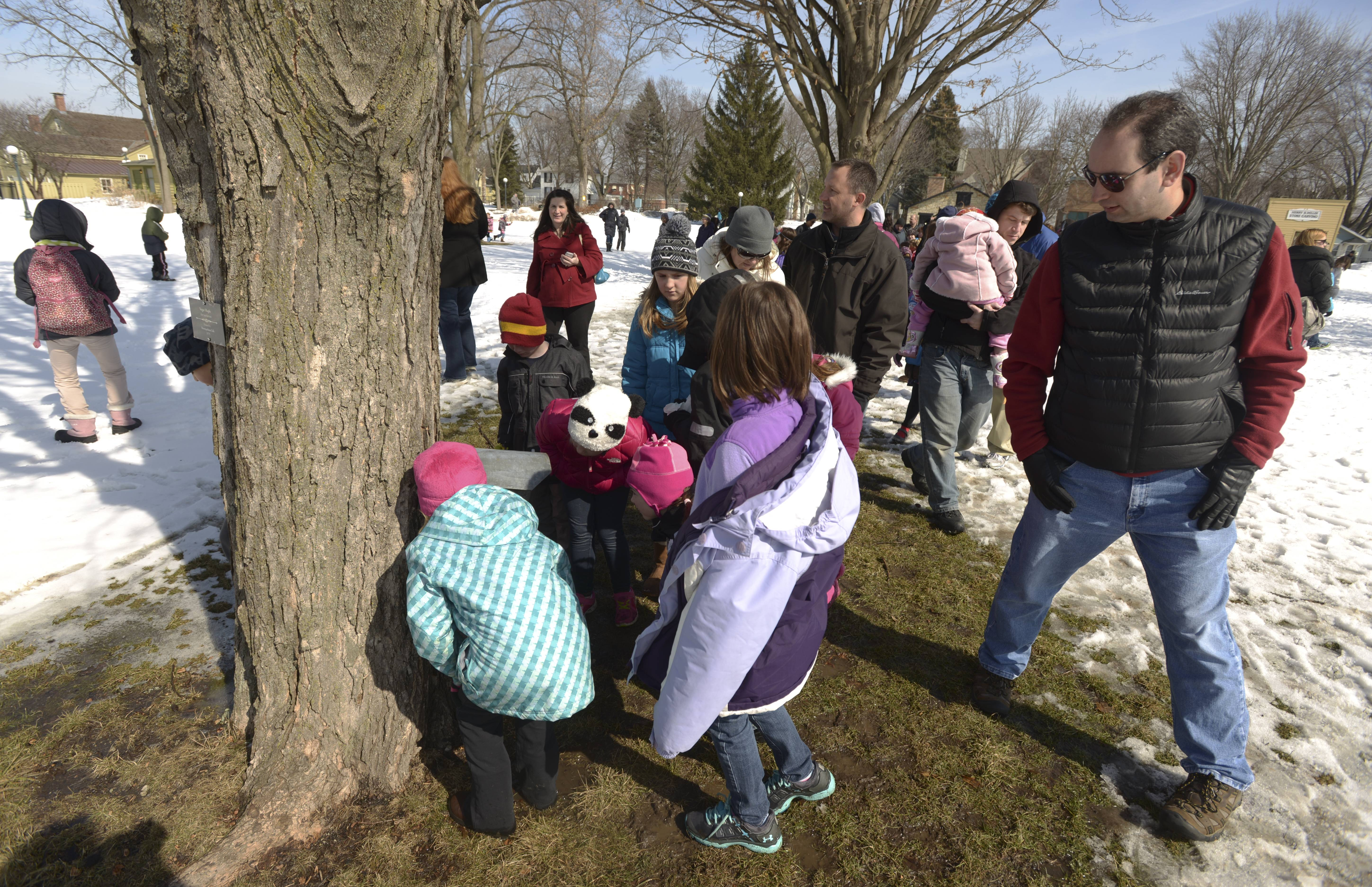 Visitors to the Naper Settlement check out a tapped maple tree Sunday that was part of a demonstration showing how maple syrup used to be made. the demonstration was part of the Naperville museum's annual Maple Sugaring Days.
