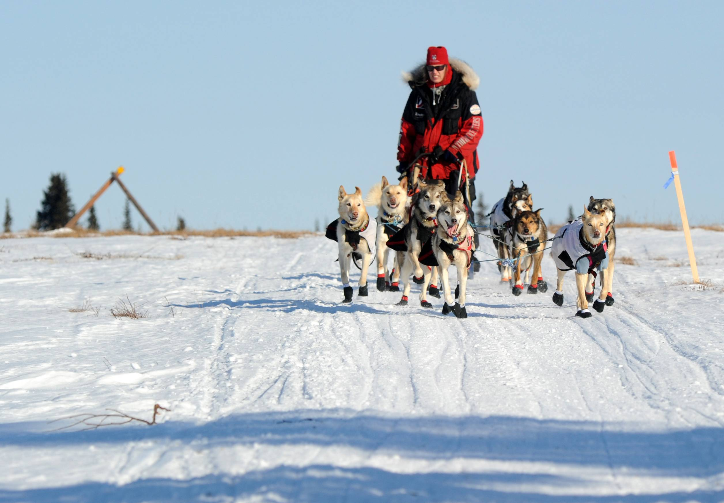 Aliy Zirkle drives her dog team across the portage from Kaltag to Unalakleet. Zirkle was the first musher to reach the Bering Sea in Unalakleet during the 2014 Iditarod Trail Sled Dog Race on Saturday.
