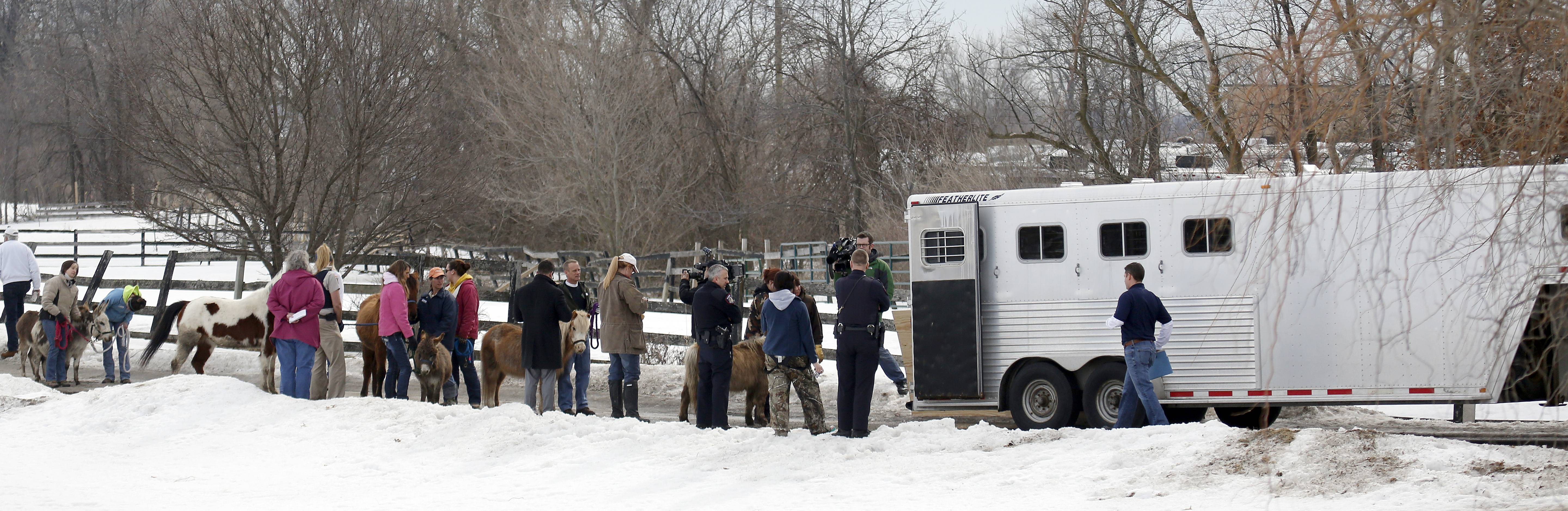 Volunteers and authorities line up to load and remove animals Tuesday from a property in Hampshire.