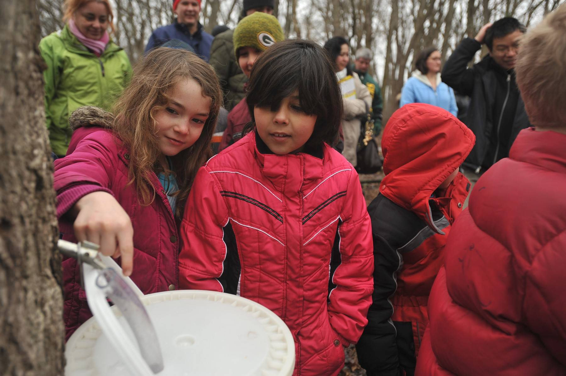 Visitors at the free MapleFest on March 15 at Red Oak Nature Center will tap a maple tree and learn how its sap is converted into maple syrup.