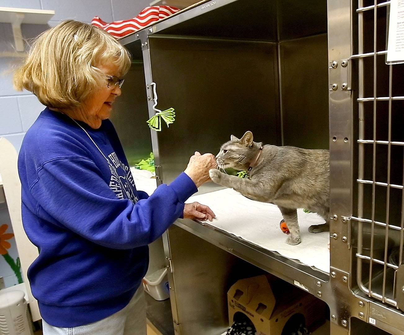 Cleo Keller, volunteer at the Naperville Area Humane Society, visits with one of the cats in the organization's shelter on Diehl Road. Keller is one of the society's founding members and has been volunteering for its entire 35-year history.