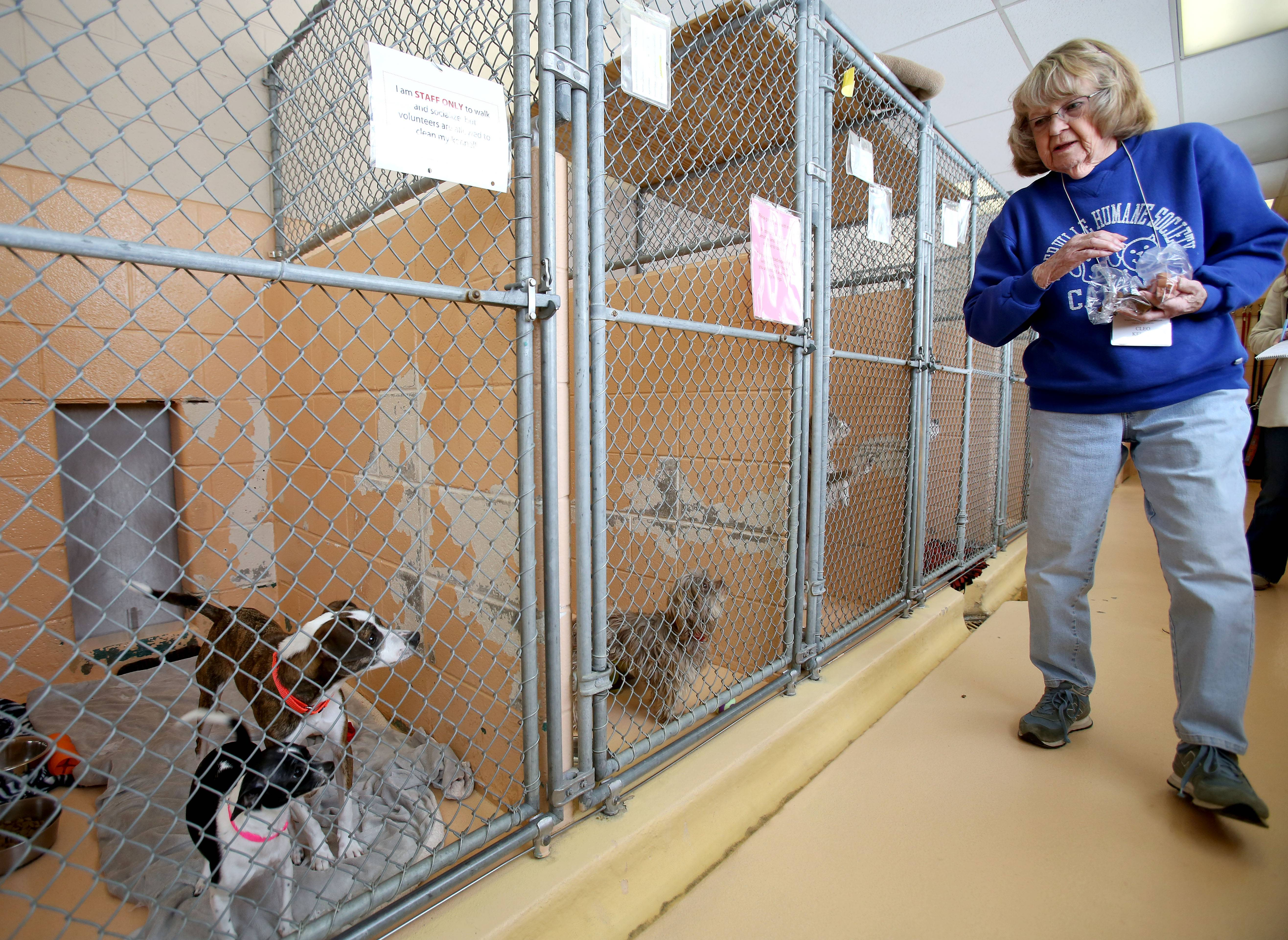 Cleo Keller feeds pieces of hot dog to pooches in the Naperville Area Humane Society's shelter as she volunteers on a recent afternoon.