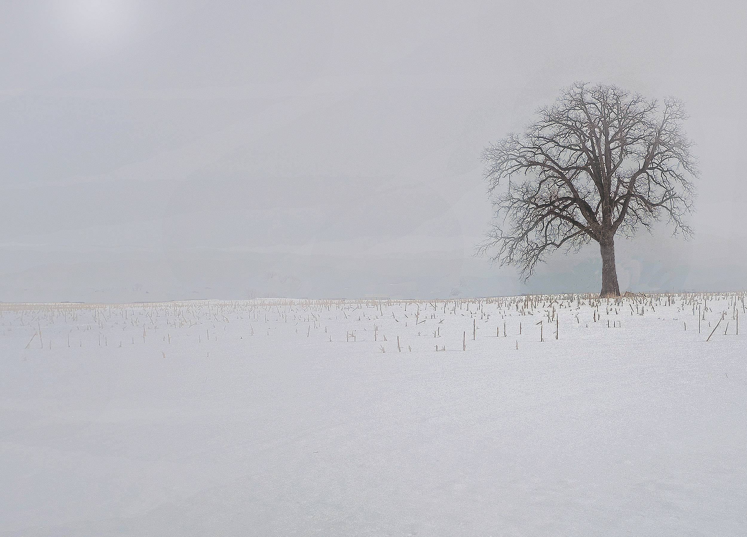 A lone tree in a snow-covered farmer's field last month.