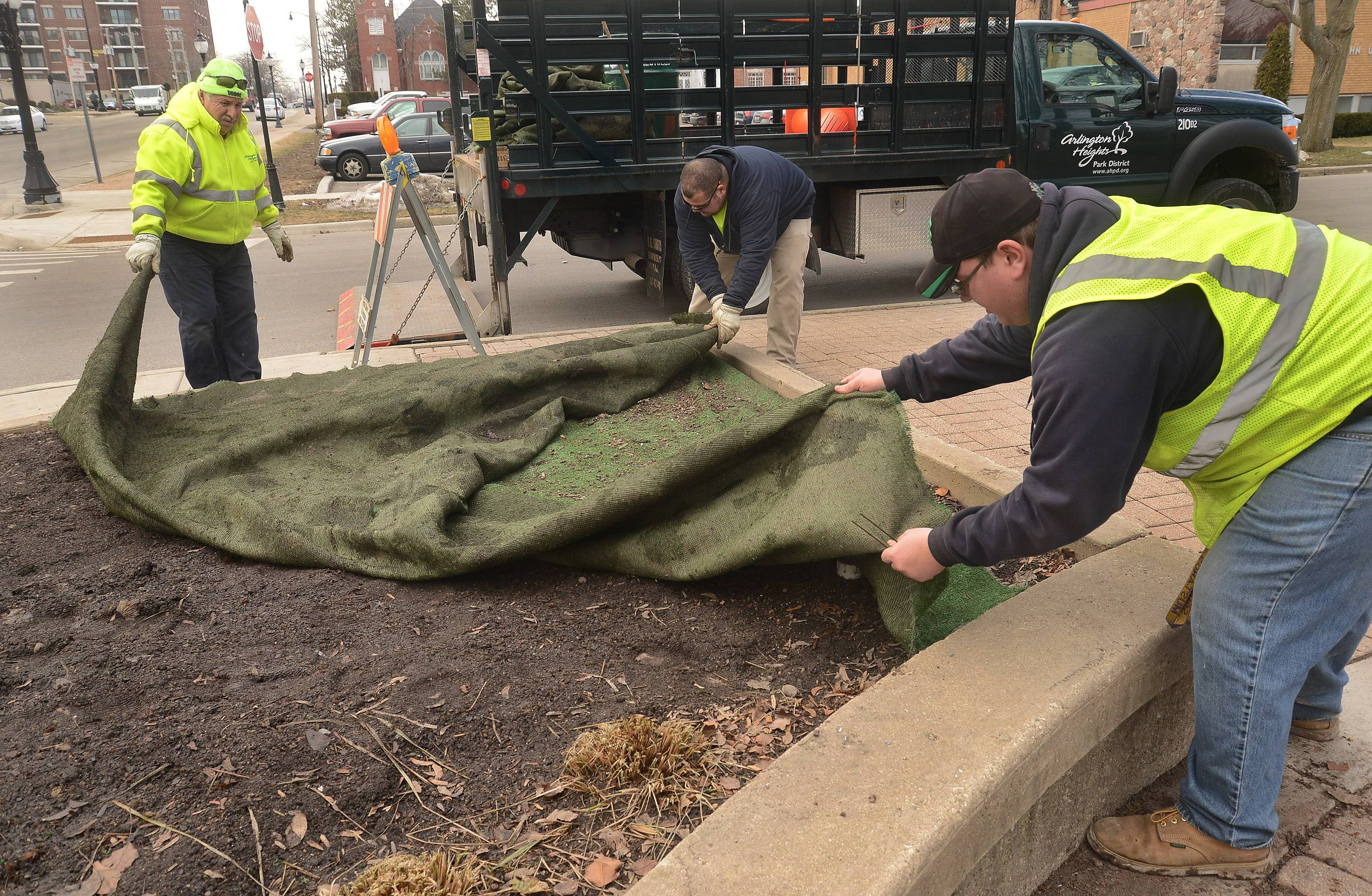 This barren tundra soon will be home to colorful flowers. Arlington Heights Park District employees, from left, Ubaldo Garcia, Rick Avila and Davis Hughes remove the protective covering from tulip beds at North School Park.