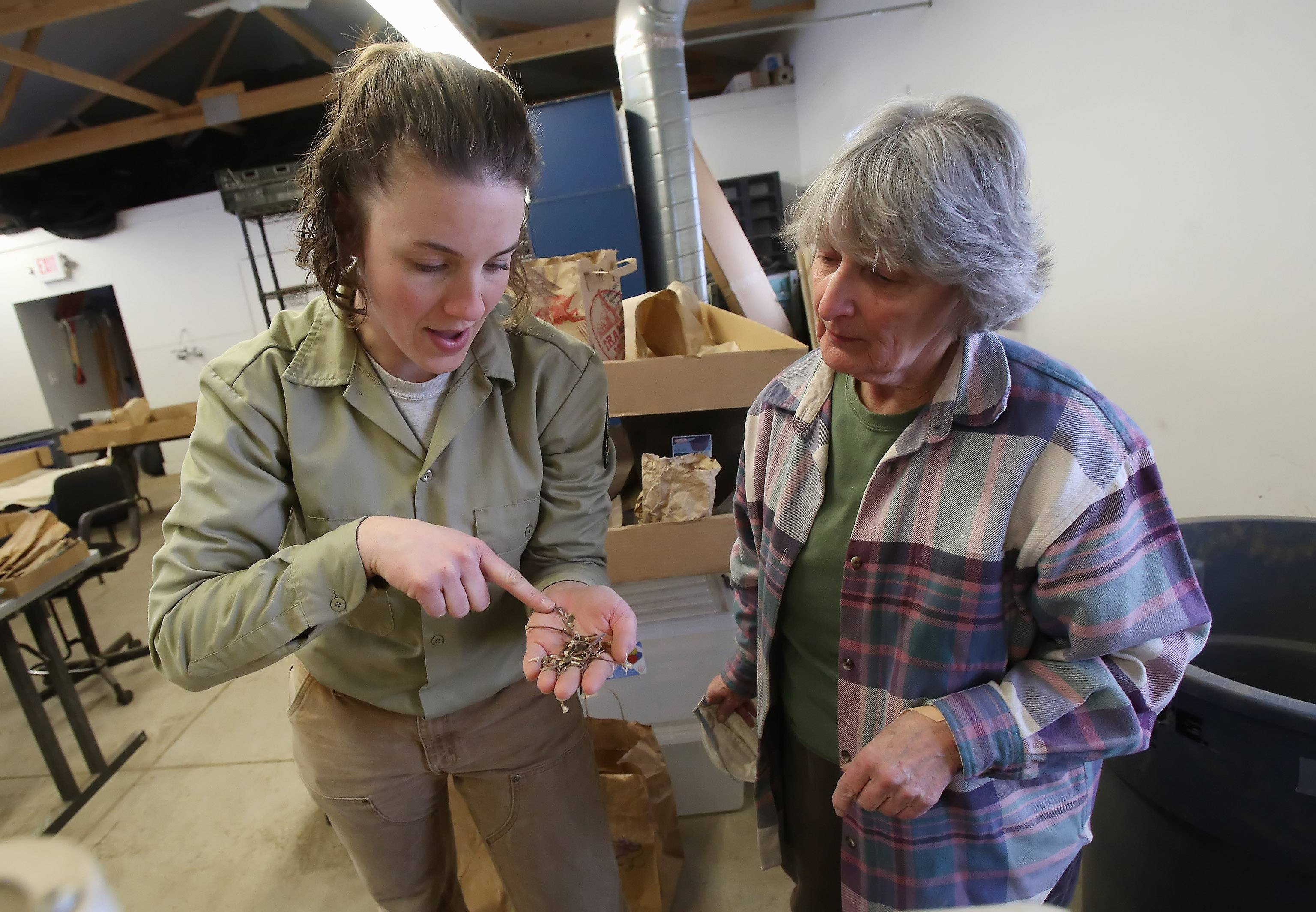 Lake County Forest Preserve nursery coordinator Kelly Schultz, left, shows volunteer Carol Hegner of Grayslake how to find the seeds in the Native Seed Nursery at Rollins Savanna in Grayslake Thursday.