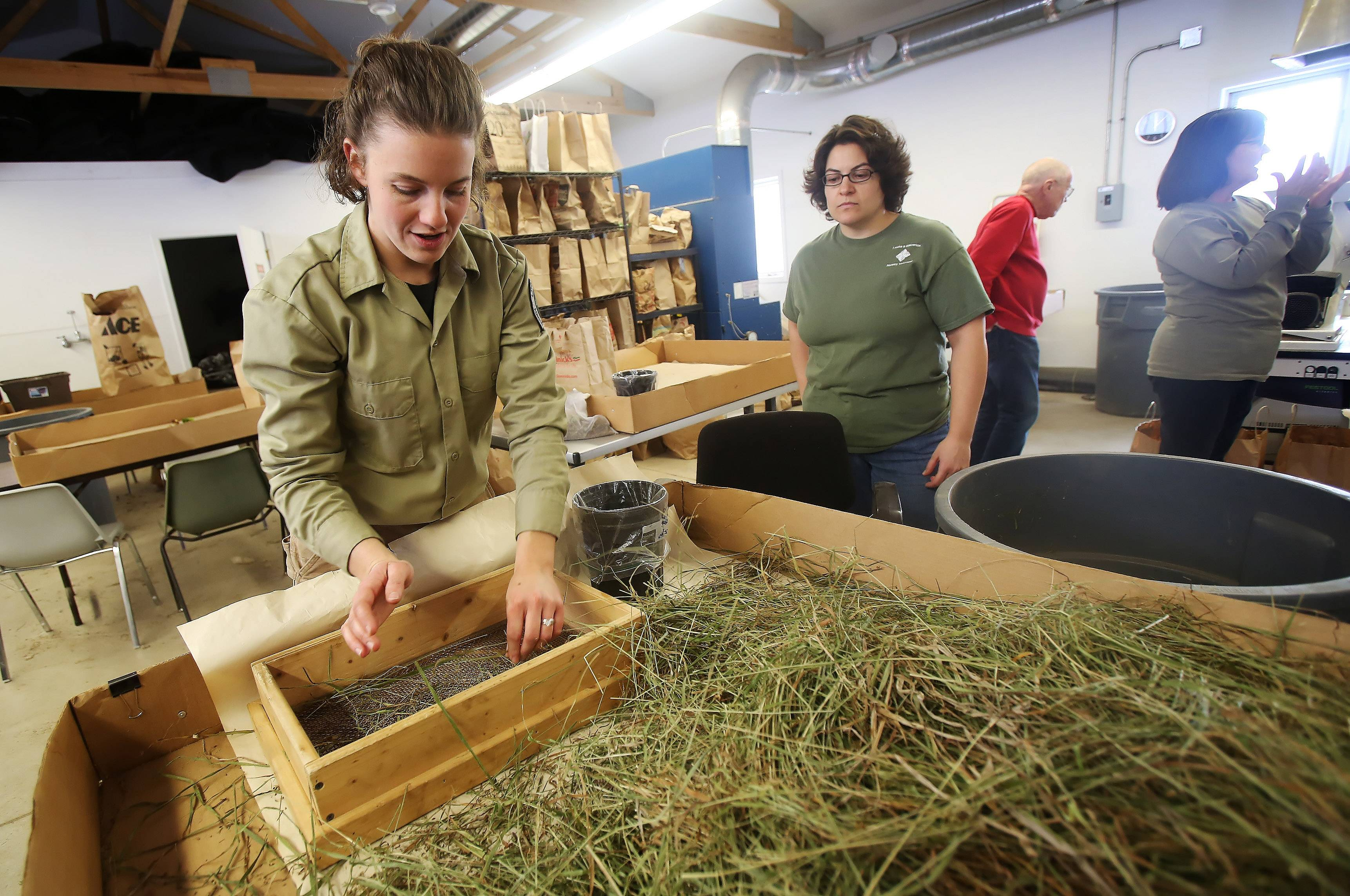 Lake County Forest Preserve nursery coordinator Kelly Schultz works with volunteers separating seeds from native plants at Rollins Savanna on Wednesday. The seeds will be used in planting throughout the different forest preserves in the spring.