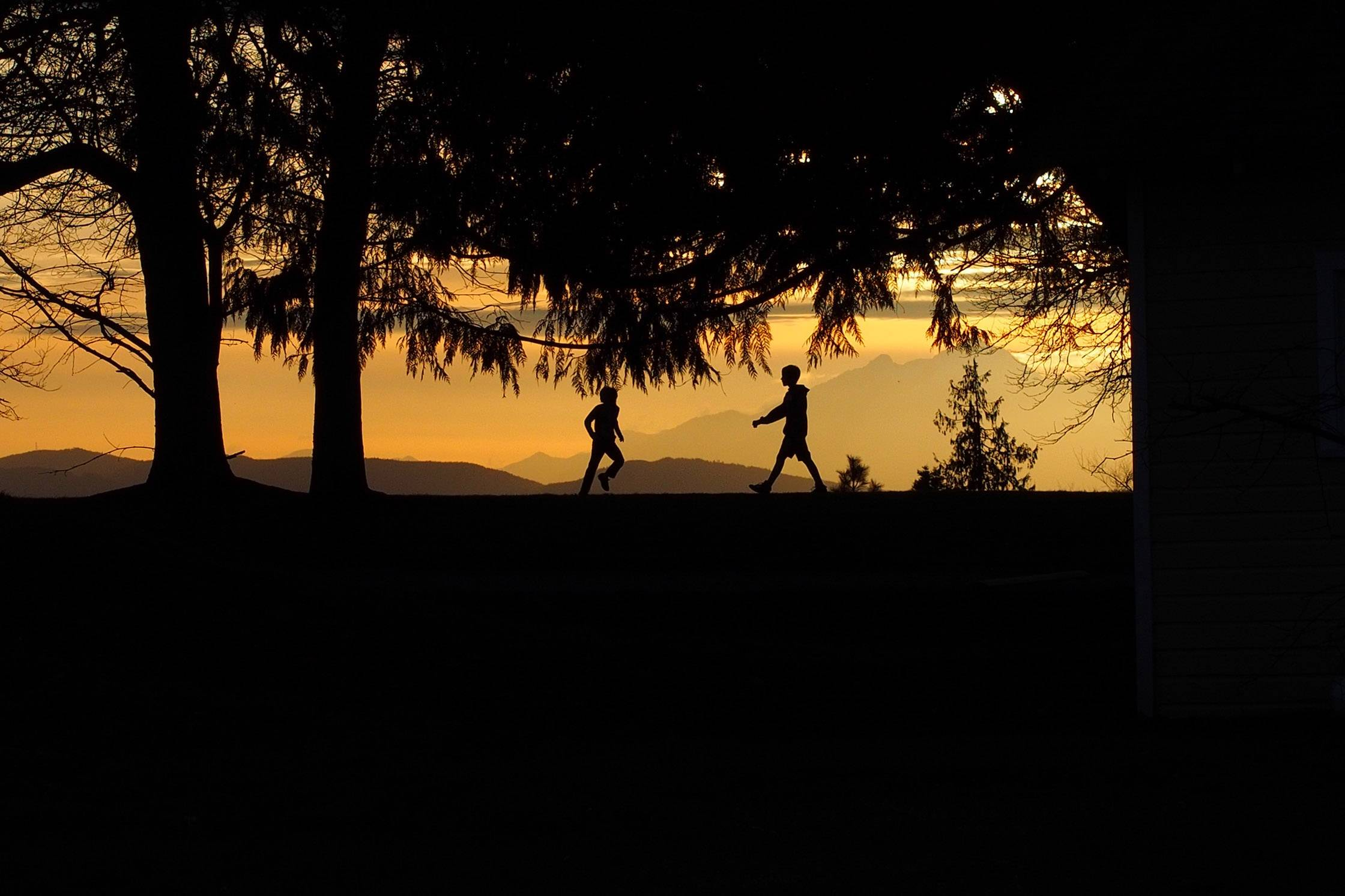 Kids play amongst the trees at Discovery Park in Seattle as the sun sets over the Olympic Mountain range on March 7.