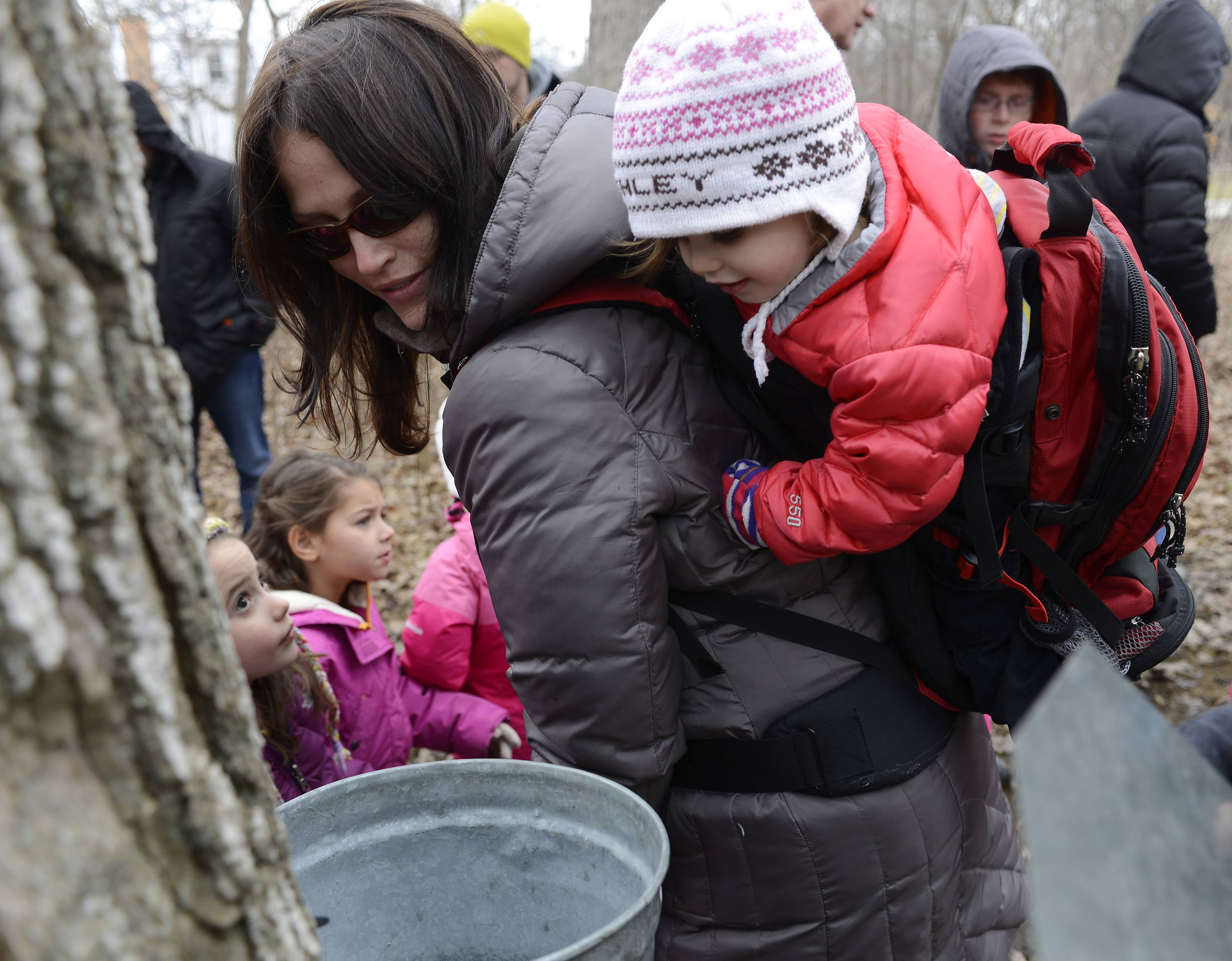 Malia Stern of Vernon Hills leans sideways a little so her daughter, Ashley, 2, can see sap being collected during the Maple Syrup Hike Saturday at the Lake County Preserve Ryerson Woods Conservation Area near Lincolnshire.