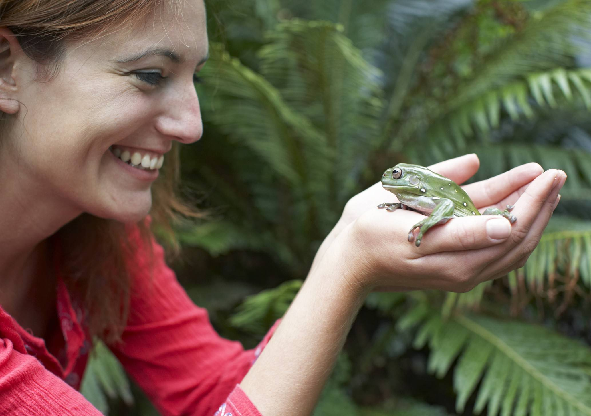 "Frog enthusiasts are invited to the ""Fabulous Frogs"" program at the Burnidge Forest Preserve in Elgin."
