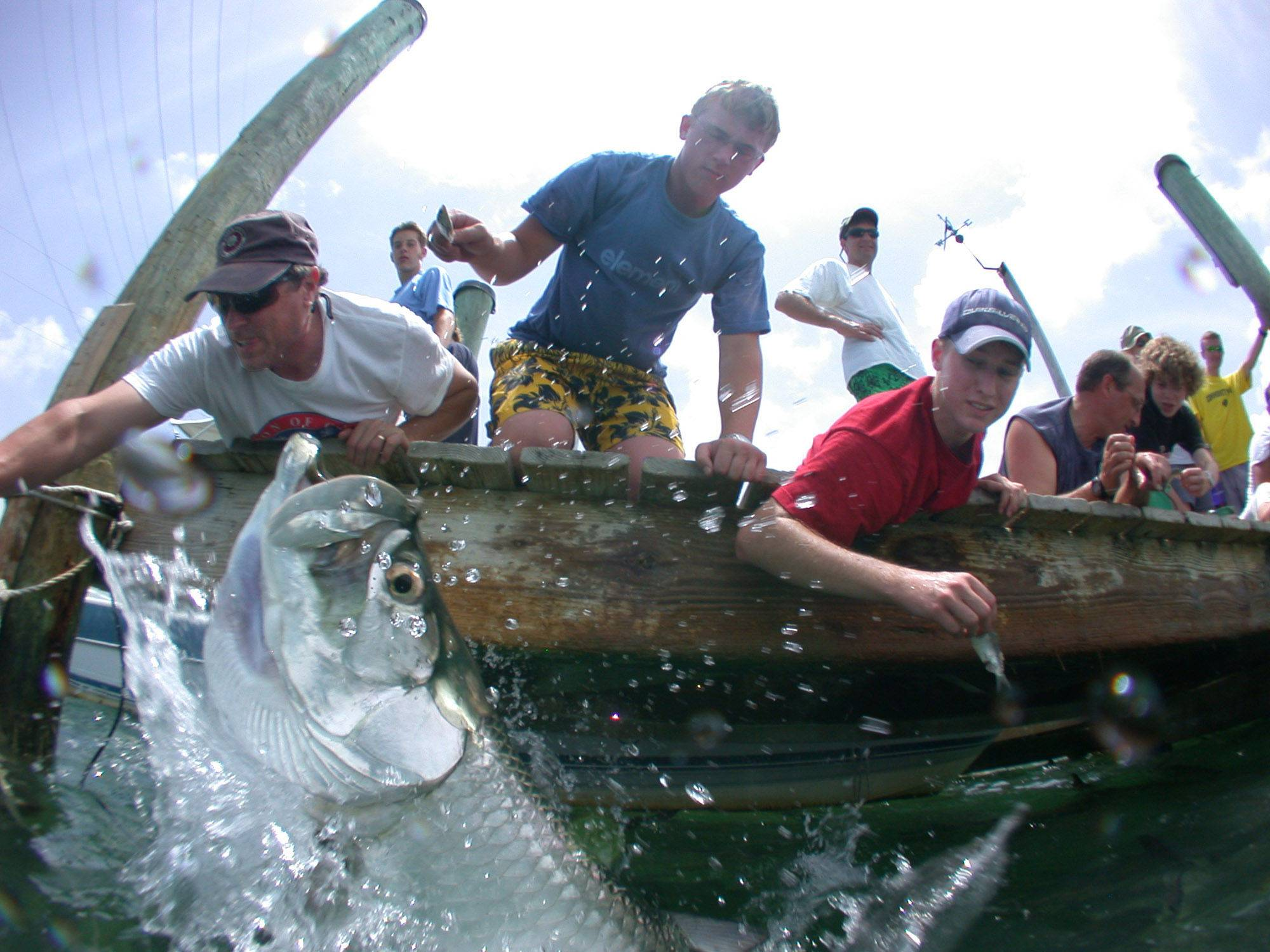 "Tourists feed tarpon at a pier at Robbie's of Islamorada in Islamorada, Fla. The tarpon have been the marina's star attraction for decades, attracting visitors who want a close encounter with the fish nicknamed the ""Silver King."""