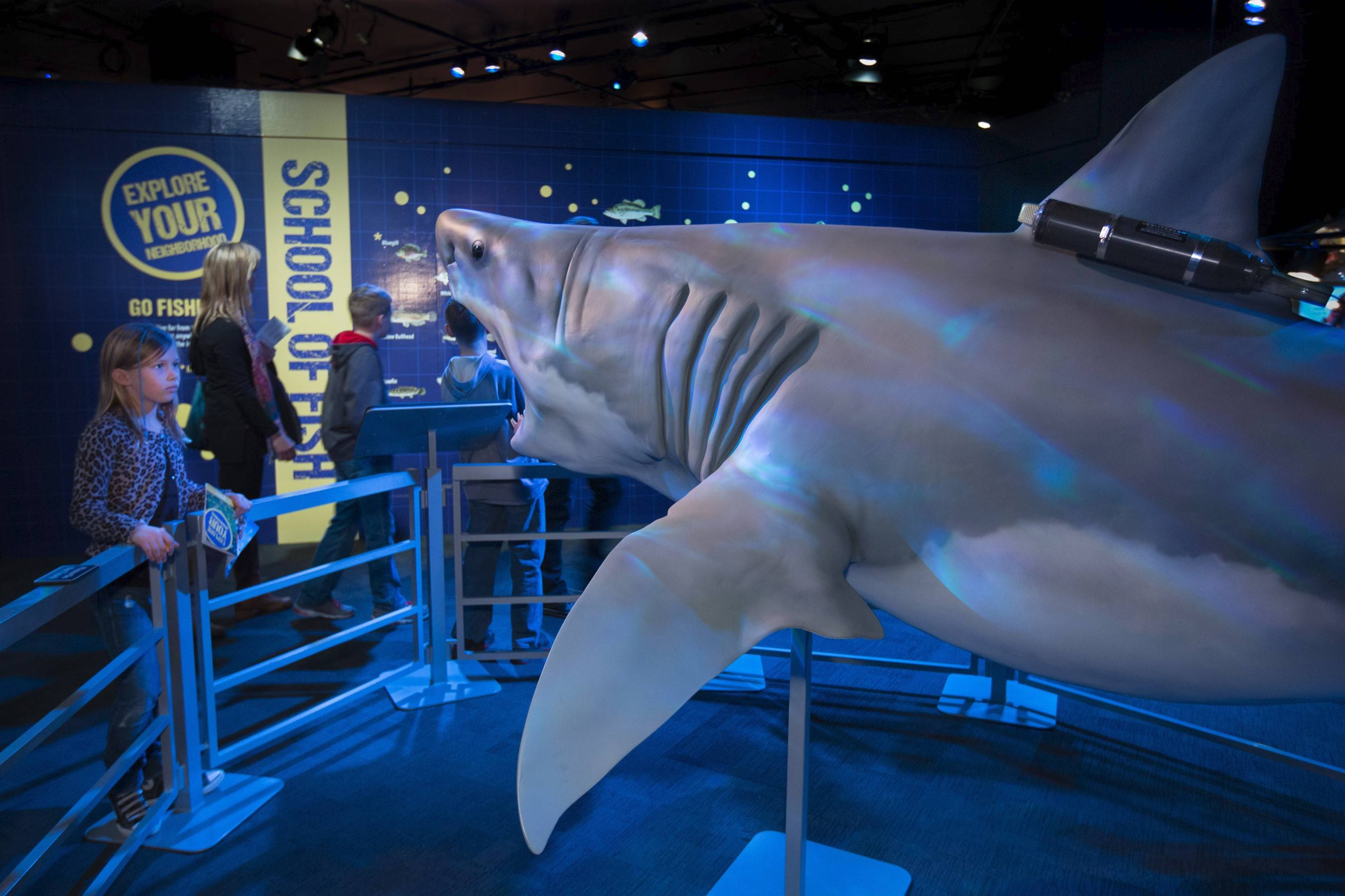 "Visitors to the Museum of Science and Industry's ""National Geographic Presents: Earth Explorers"" exhibit come face to face with an 11-foot-long sculpted shark."