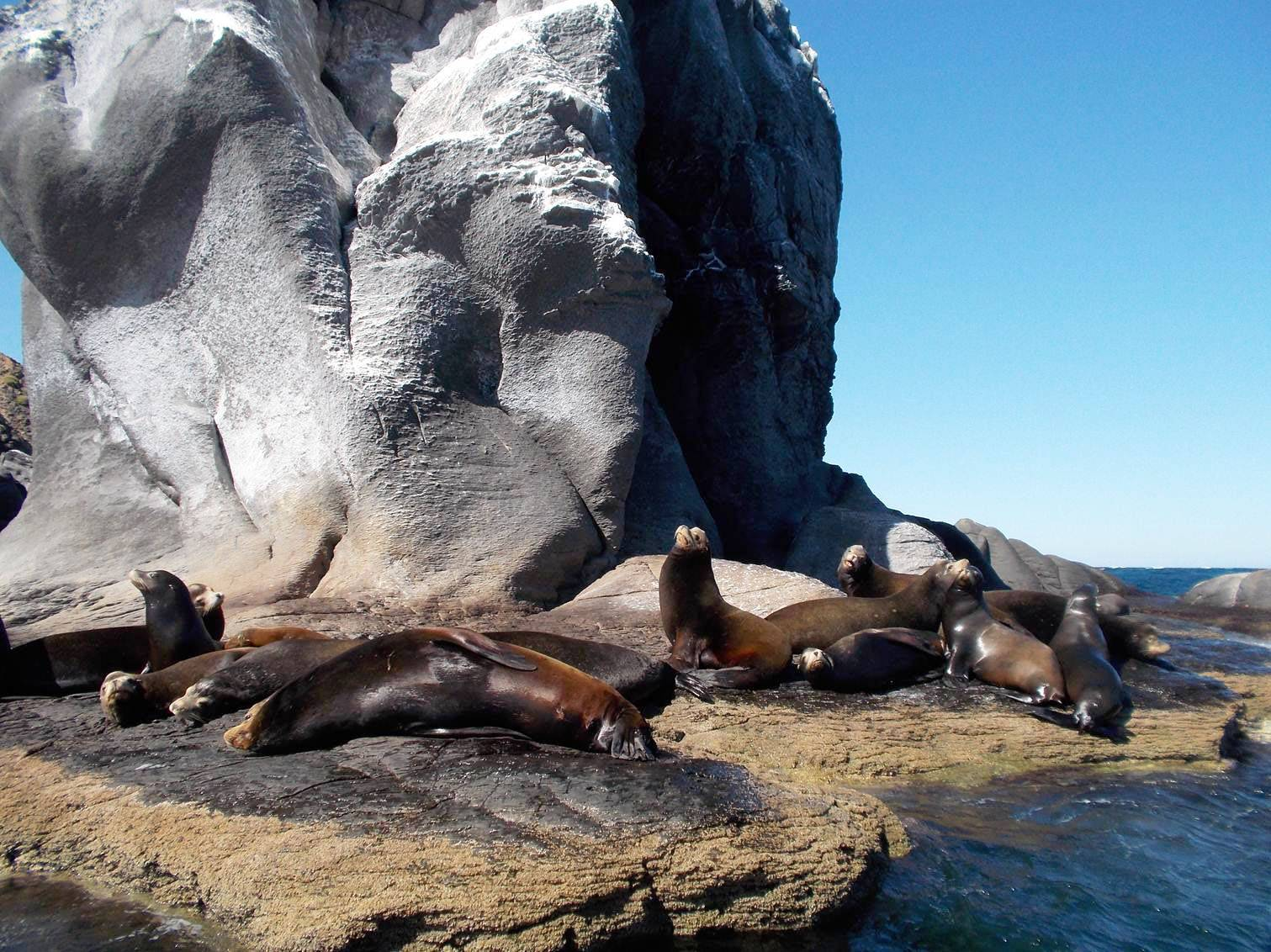 Sea lions rest on Coronado Island in the Loreto Bay National Marine Park in Loreto, Mexico.
