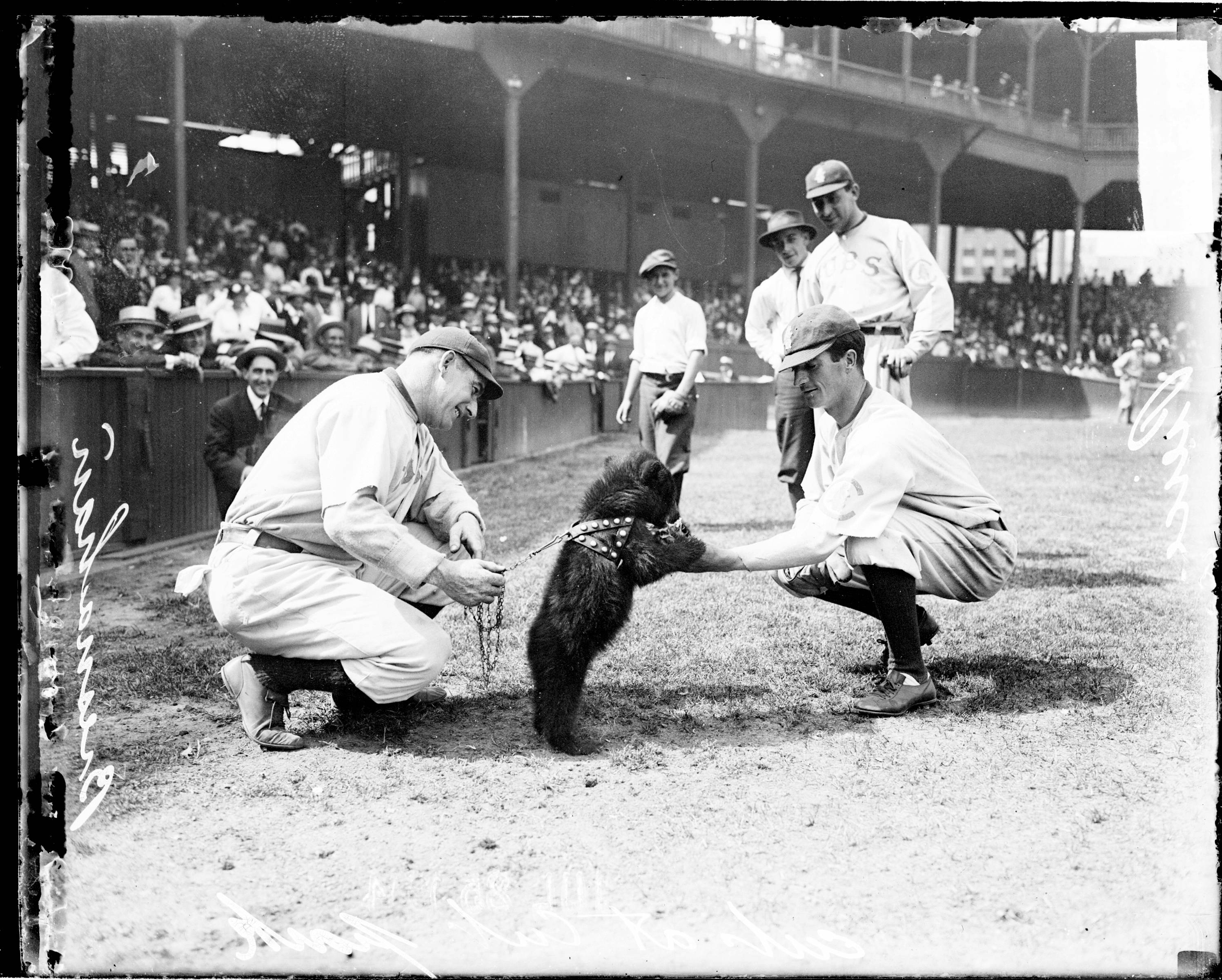 This Aug. 25, 1916, photo shows National League's Chicago Cubs baseball player George Pierce petting a bear cub while Cubs player Roger Bresnahan holds the cub's leash at the first National League game at Weeghman Park in Chicago, later to be named Wrigley Field.