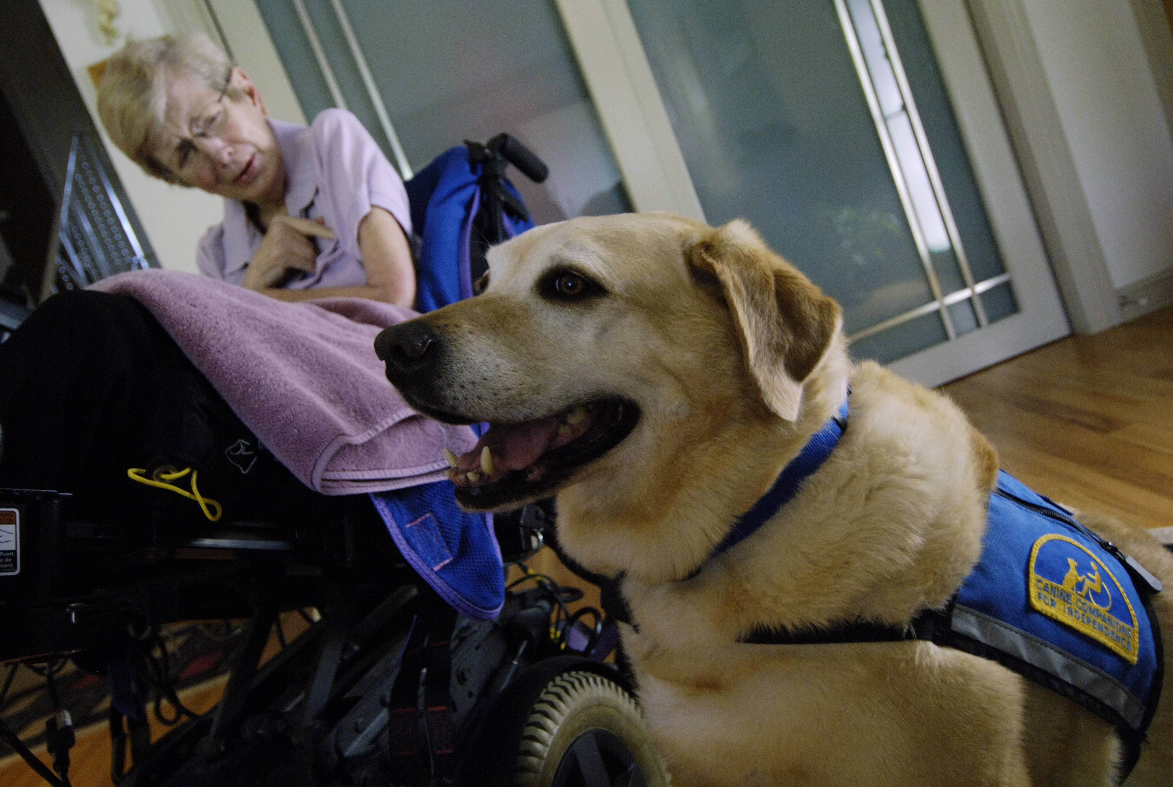 Zurich, a yellow Labrador retriever who served as the constant companion of Des Plaines resident Patti Kennedy, has died. He received a national service dog award in 2011.