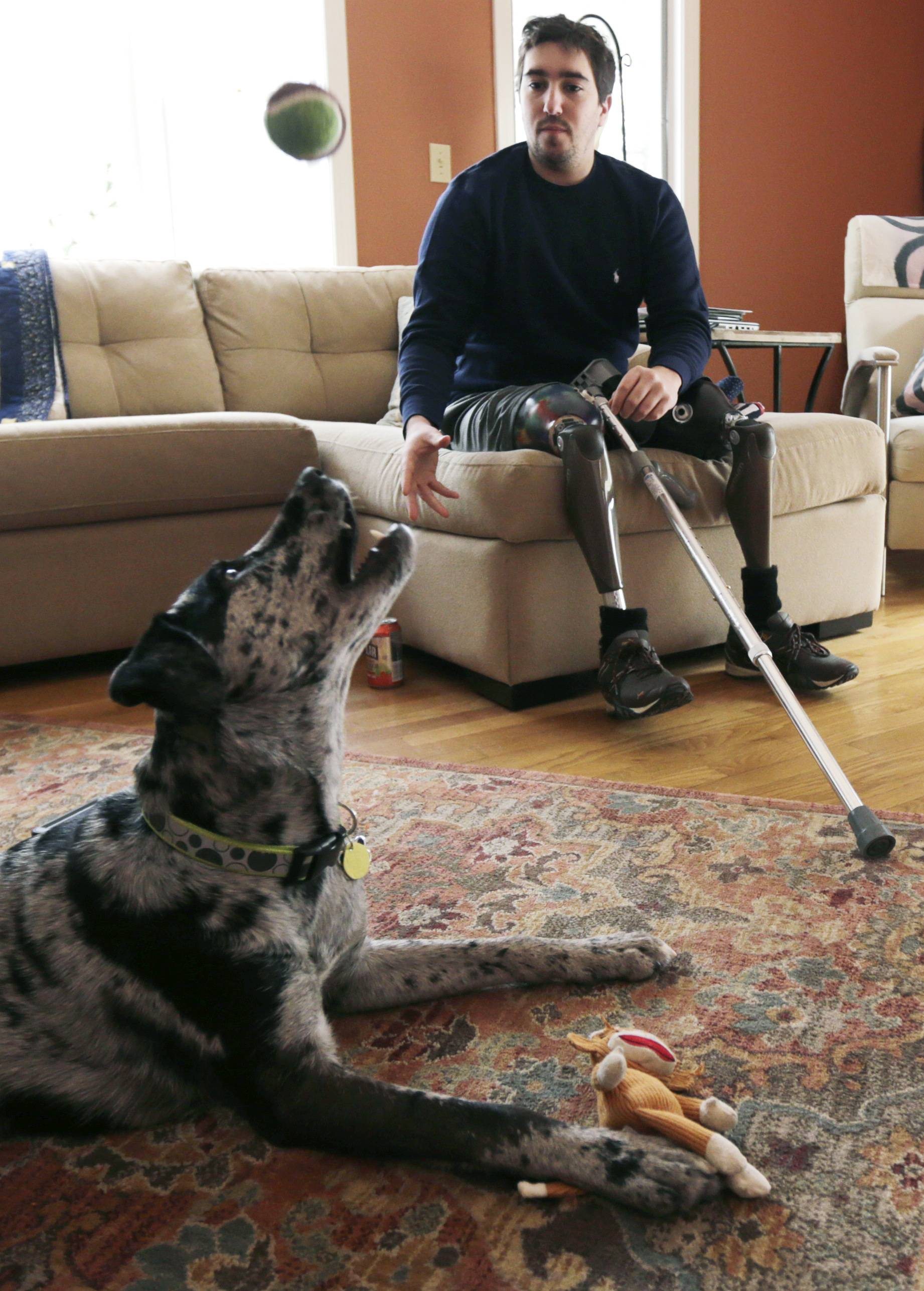 Jeff Bauman plays catch with his dog Bandit, at his Carlisle, Mass., home. Bauman, who lost both his legs above the knee in the Boston Marathon bombing, played a key role in identifying the men suspected of placing the two devices.