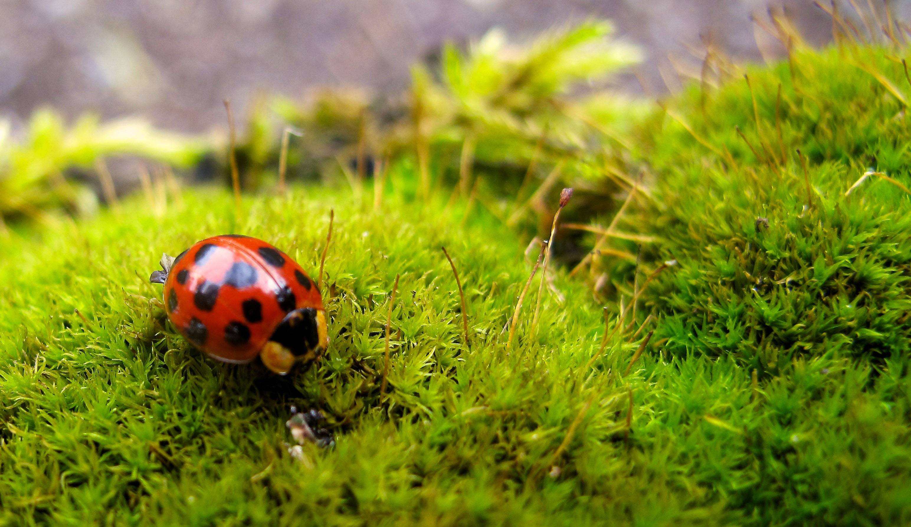 Many gardeners use pesticides — organic or otherwise — only as a last resort. They opt instead for such predatory insects as ladybugs, which individually can consume up to 5,000 aphids during their lifetime, and can be bought commercially and released from containers into the garden.