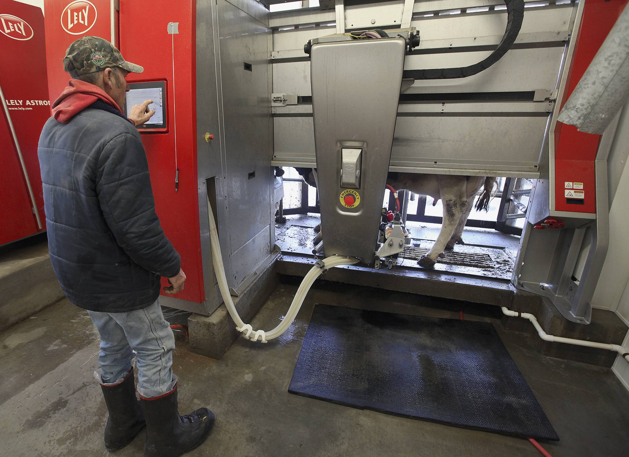 Roger Shupe checks the robotic milking system he and his brother Rod Shupe use on their dairy farm near Mendon