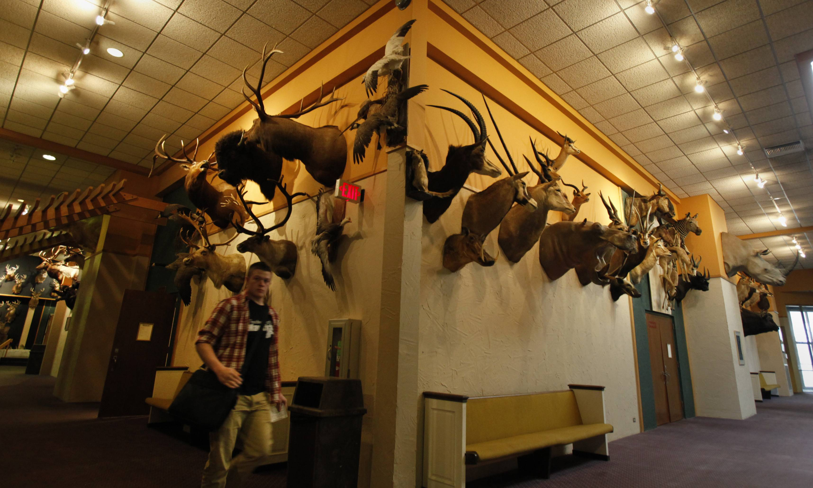 Providence Baptist College in Elgin is adorned with heads of hundreds of animals, about half of them hunted with a bow and arrow by pastor Keith Gomez.