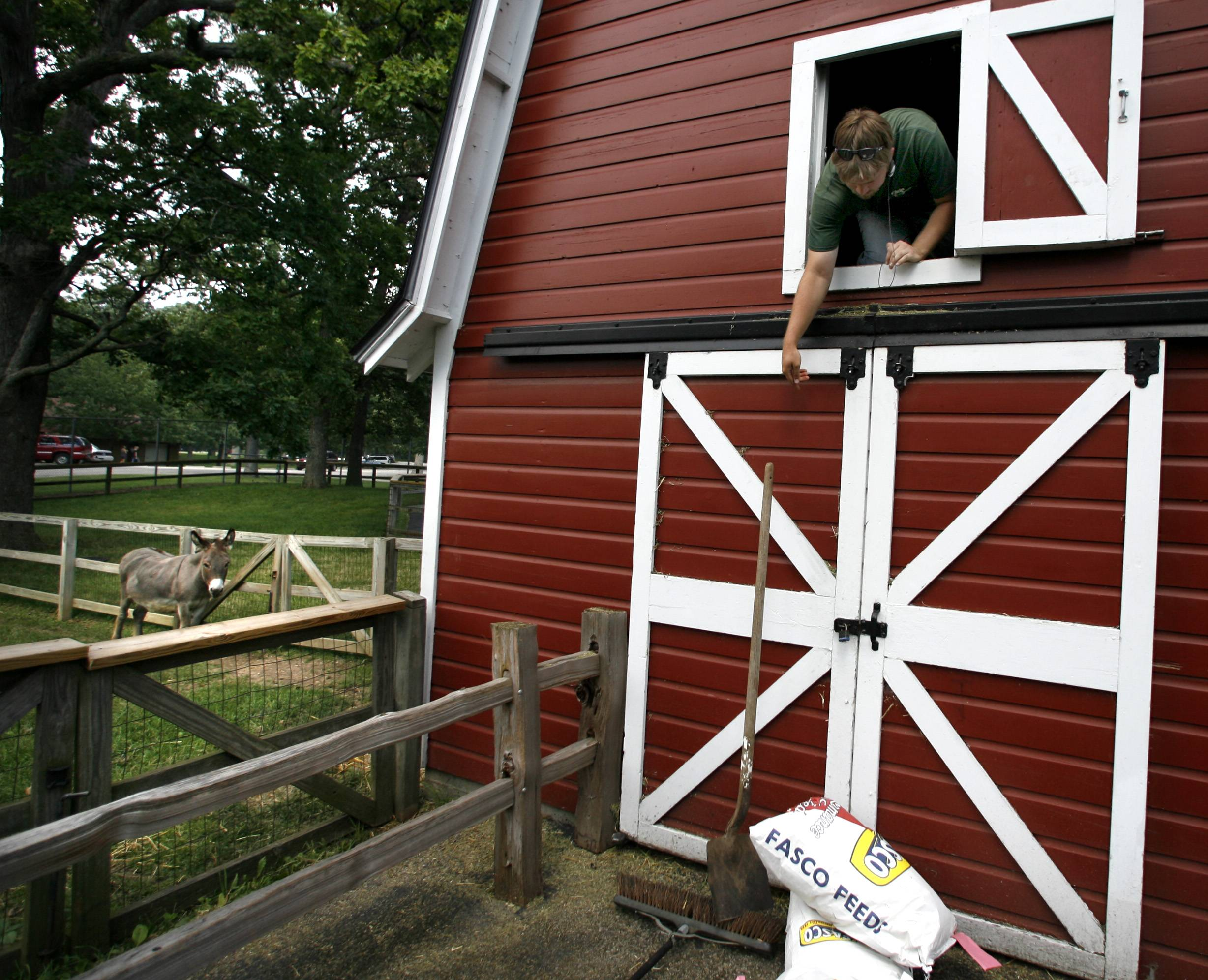 People will be able this summer to visit farm animals at Lords Park Zoo in Elgin for the first time in five years. In this 2008 photo, Rich Wicklein of Elgin drops a shovel he used to clean out a barn at the zoo.