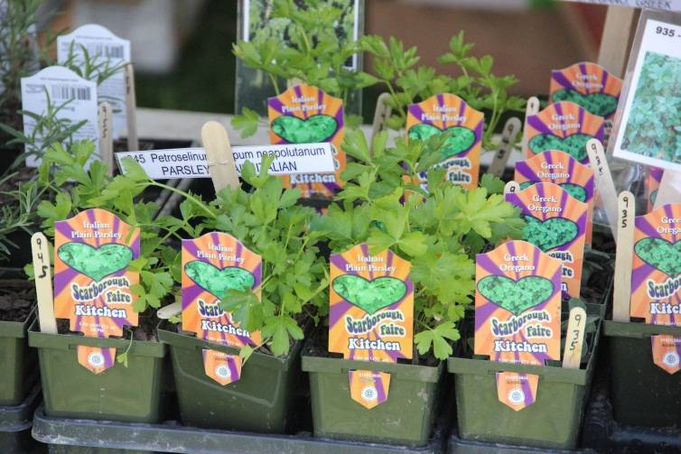 Plants that will be available at the Backyards for Nature Fair and Native Plant Sale.Schaumburg Park District