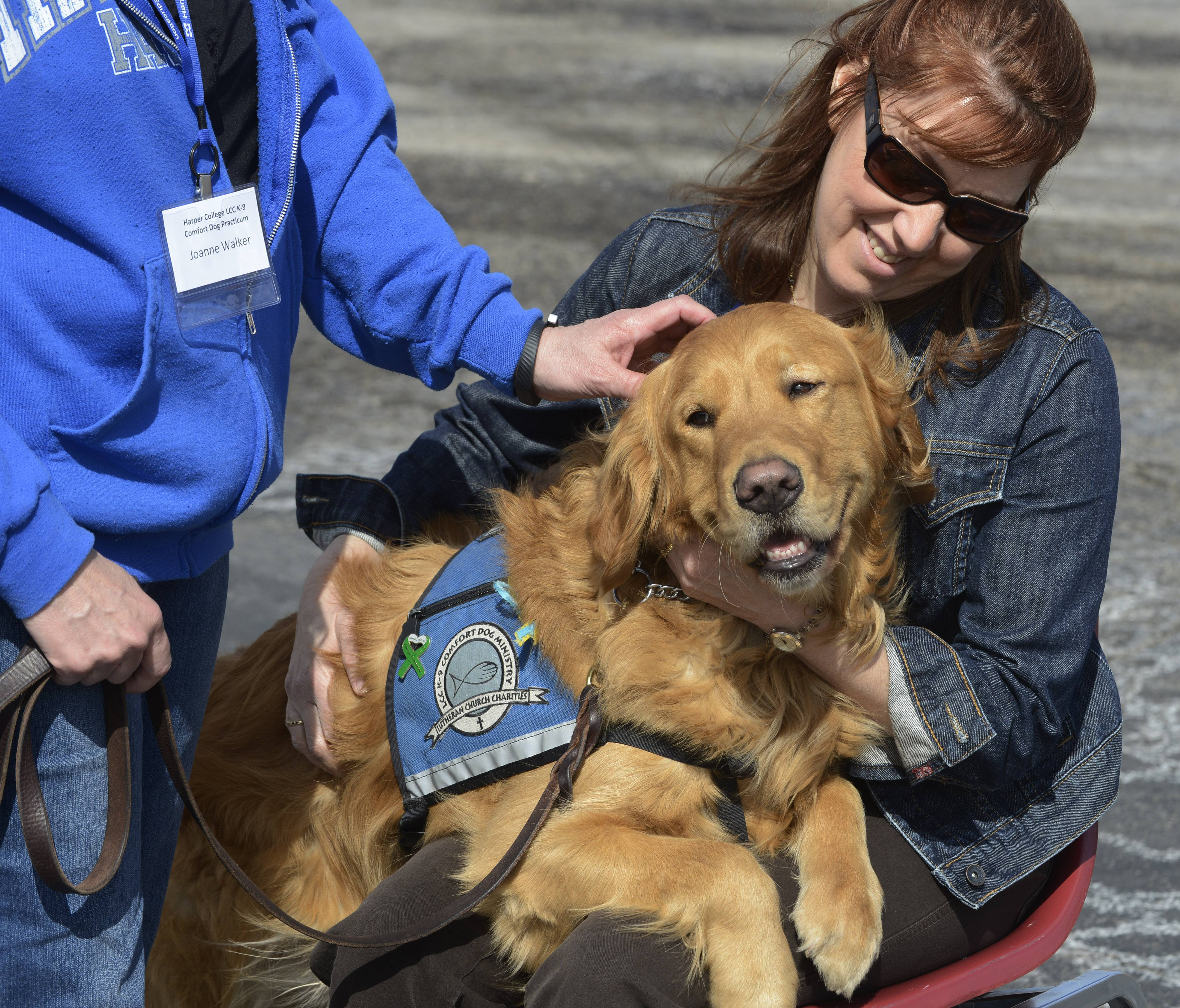Luther plops in the lap of Lori Bonefas of Lake Zurich as Harper College students put their online lessons into practice working with therapeutic dogs.