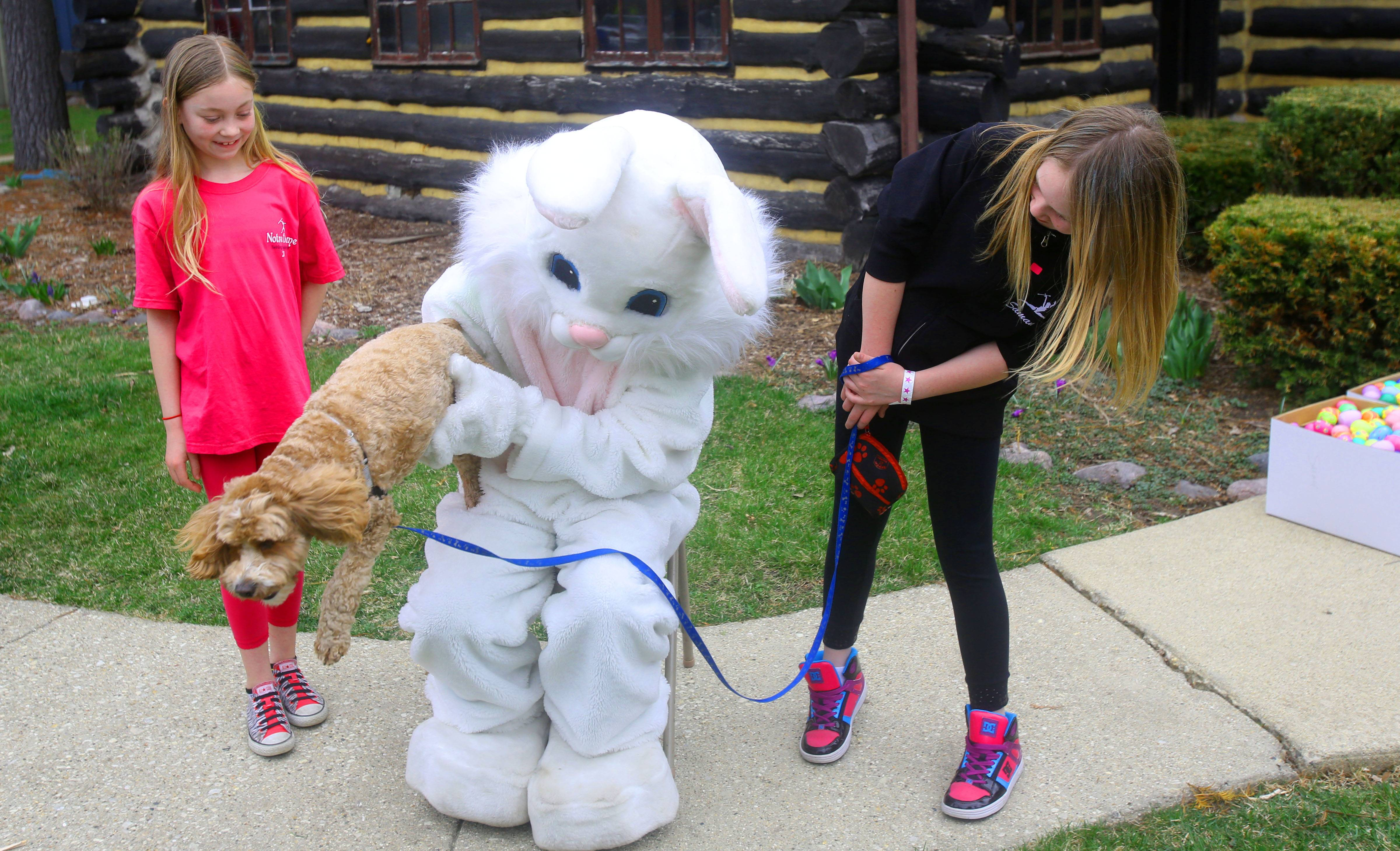Scooby escapes the Easter Bunny's grasp Sunday during the sixth annual Doggie Egg Hunt at the Cabin Nature Center White Oaks Dog Park in Wood Dale. Tiffany and Samantha Zaremba watch their dog jump down.