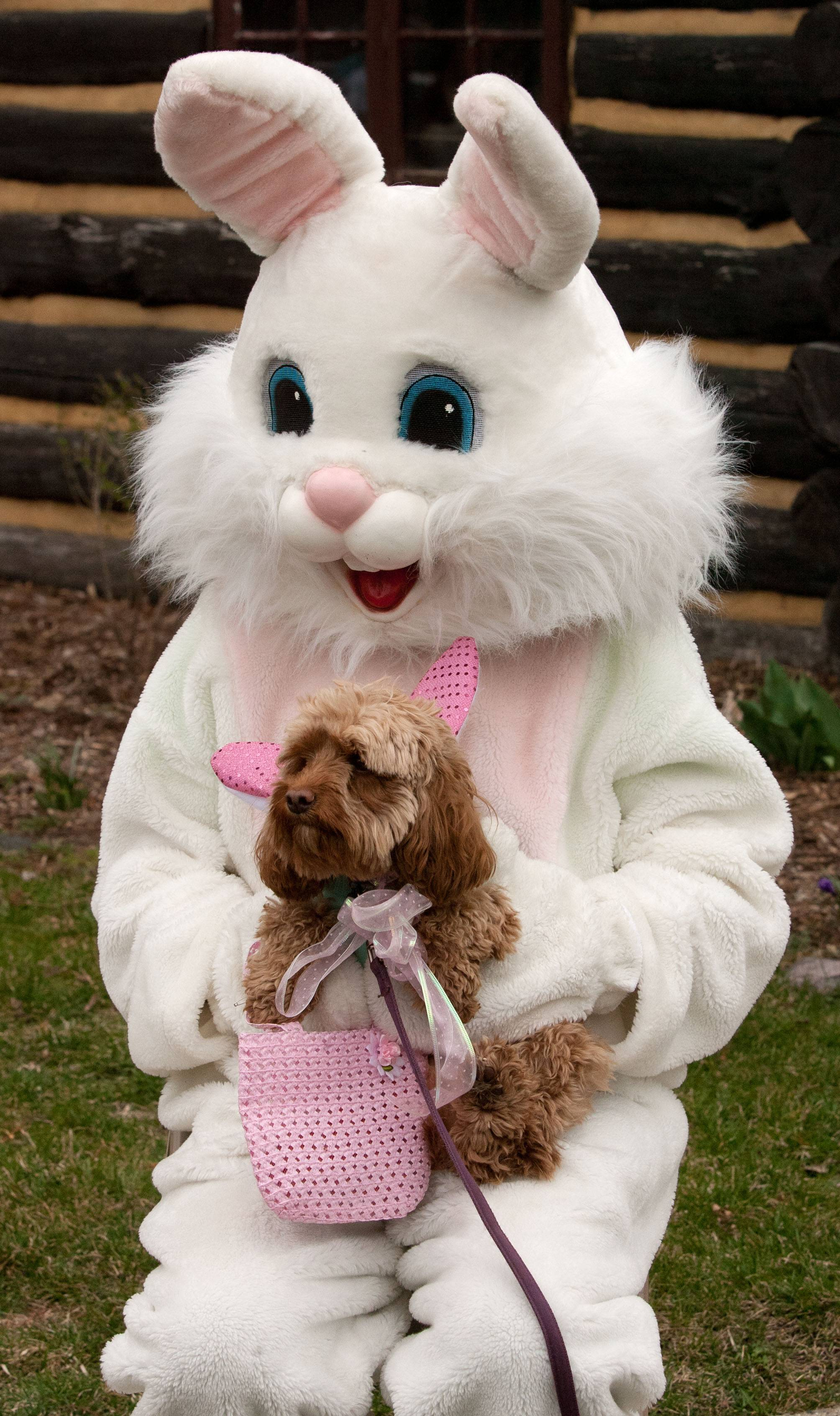 The Easter Bunny poses with Lucy, a dog owned by Agnes Indurante of Elk Grove Village, during the sixth annual Doggie Egg Hunt at the Cabin Nature Center White Oaks Dog Park in Wood Dale.