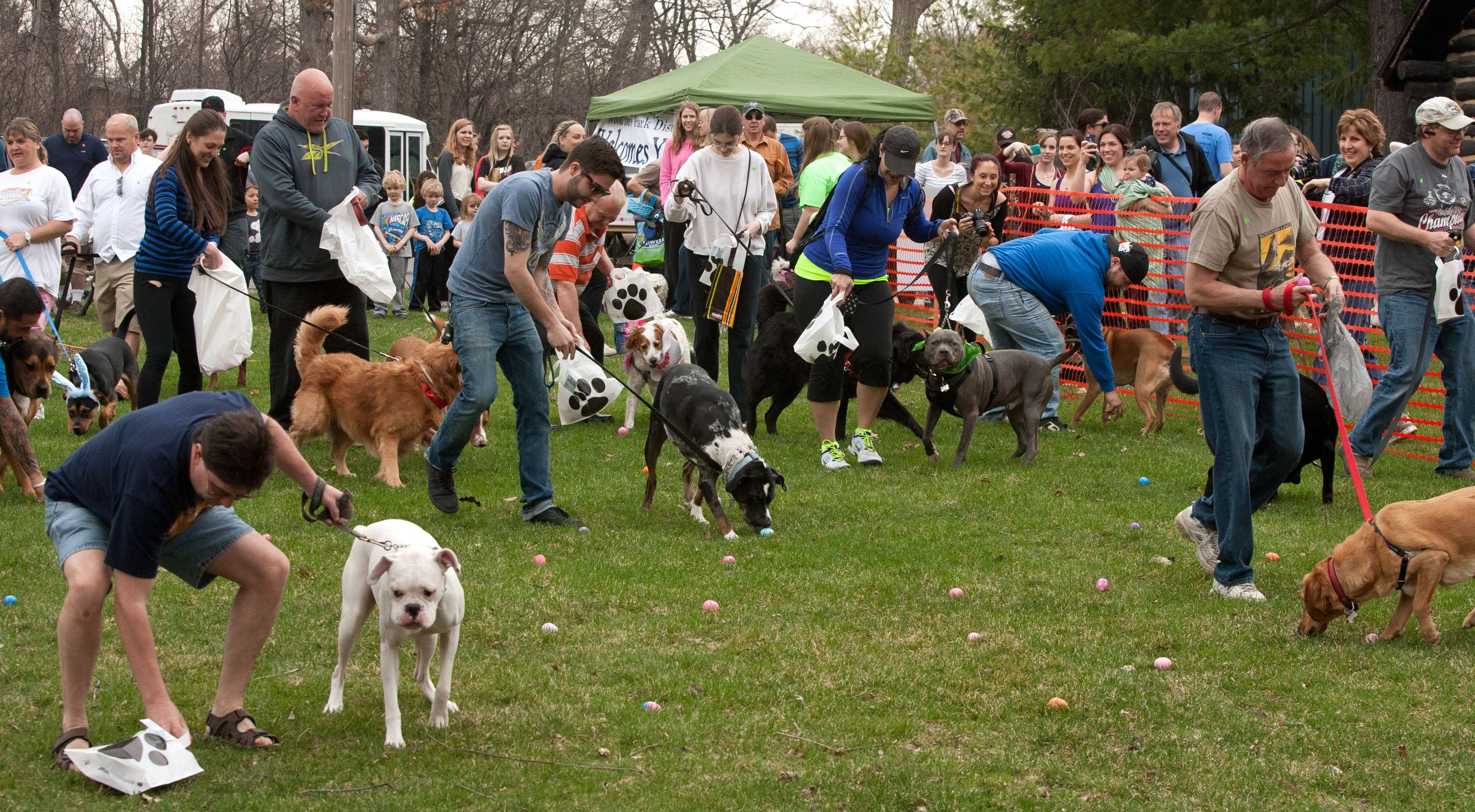 Close to 100 canines and their owner's went on the hunt Sunday for plastic eggs filled with dog treats and other goodies during the sixth annual Doggie Egg Hunt at the Cabin Nature Center White Oaks Dog Park in Wood Dale.