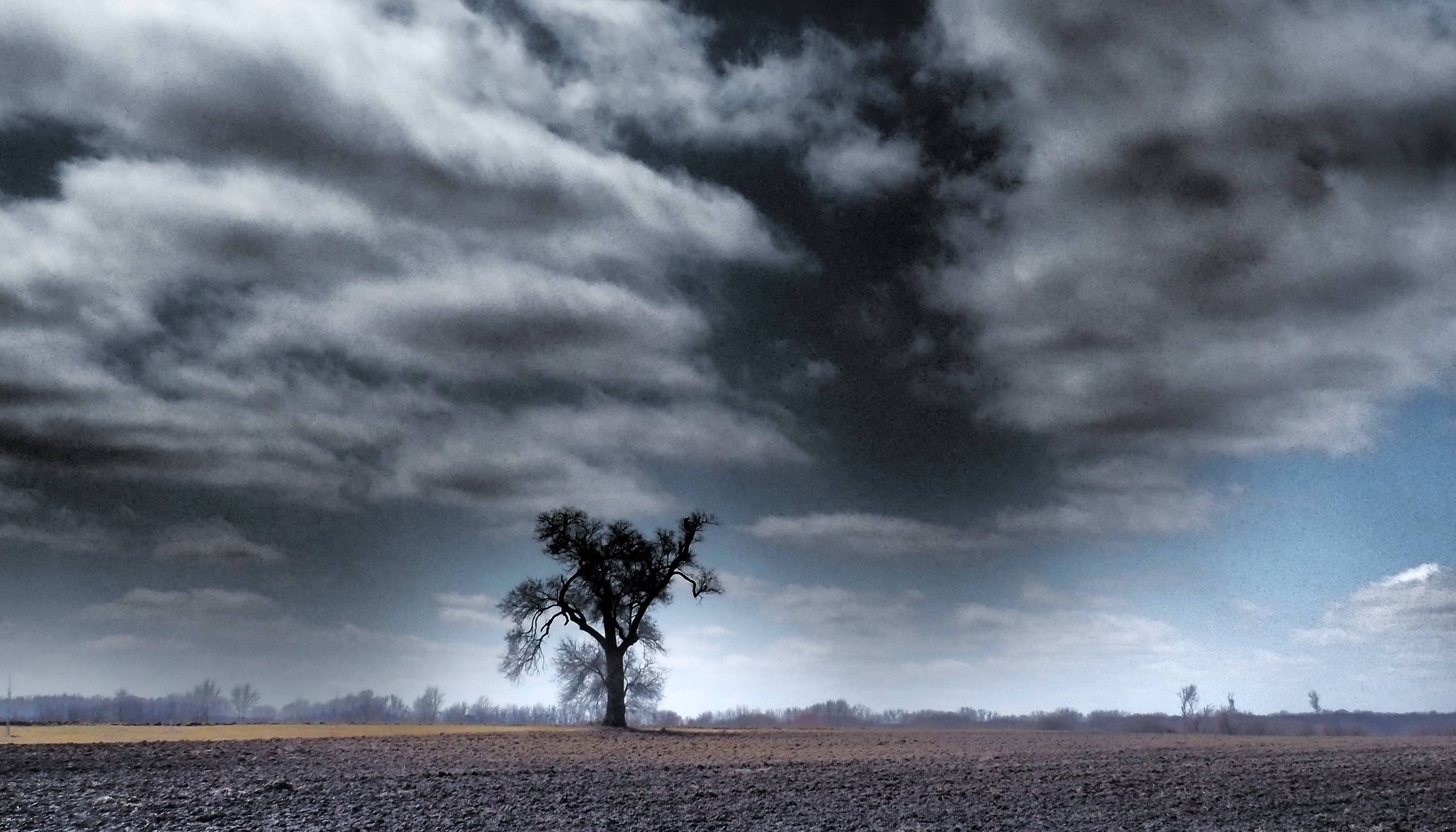 This craggy tree on the Danada Farm in Wheaton seems ready to take on Spring's angry skies when they arrive in a few weeks. Contrasts can make interesting photos. The lone tree contrasts with the barren ground. Light and dark contrast for dramatic effect. This photo was published in the Perspective column in the print edtion.