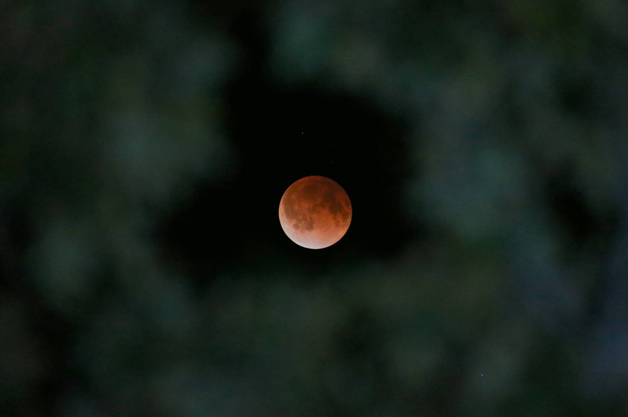 The Earth's shadow is cast over the surface of the moon as a total lunar eclipse is seen though a Magnolia tree top in the sky over Tyler, Texas at 2:57 CDT on Tuesday morning, April 15, 2014.