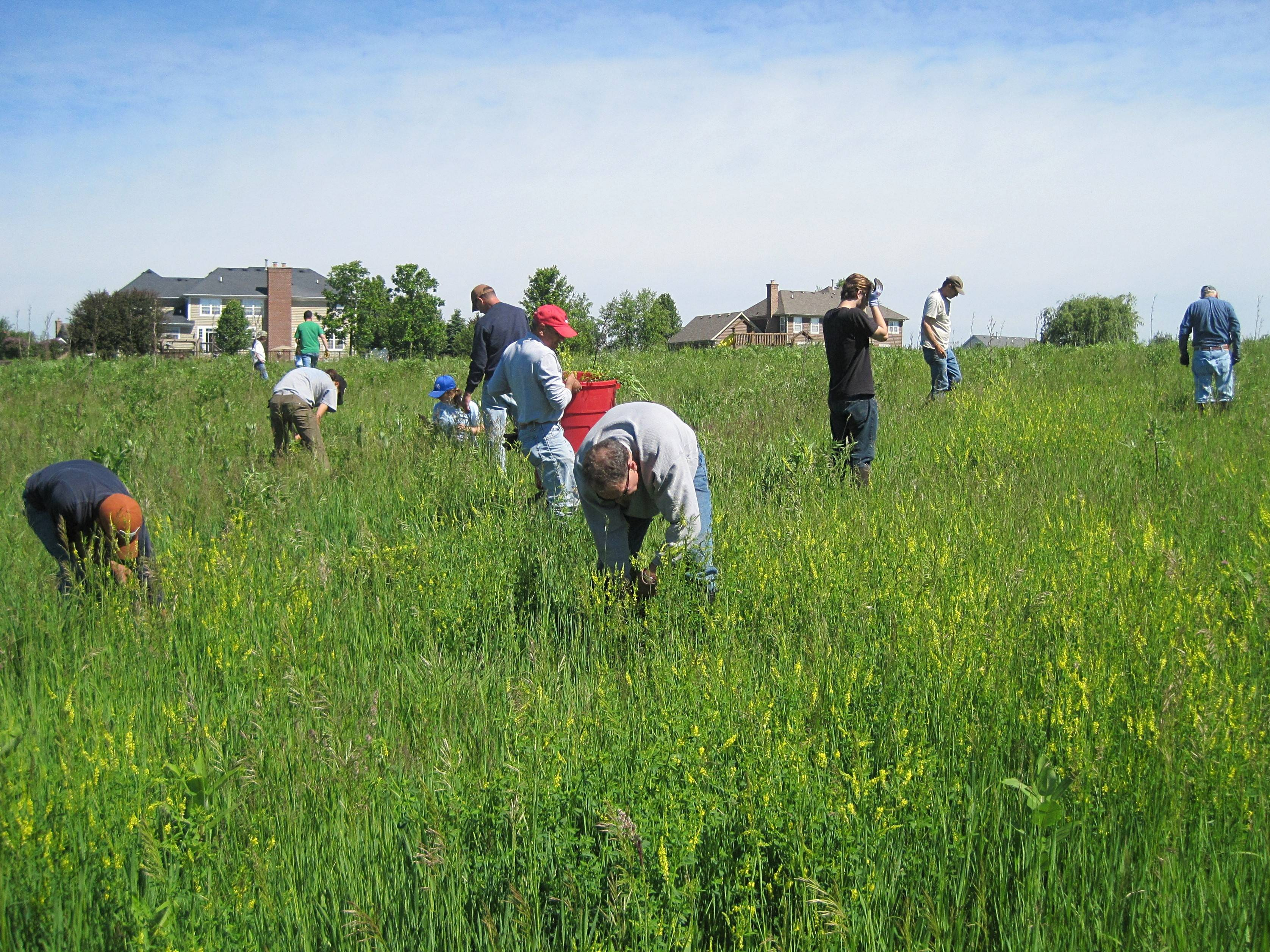Citizens for Conservation Earth Day volunteers will work 9 to 11 a.m. on Saturday, April 26, continuing the group's restoration of its preserves.