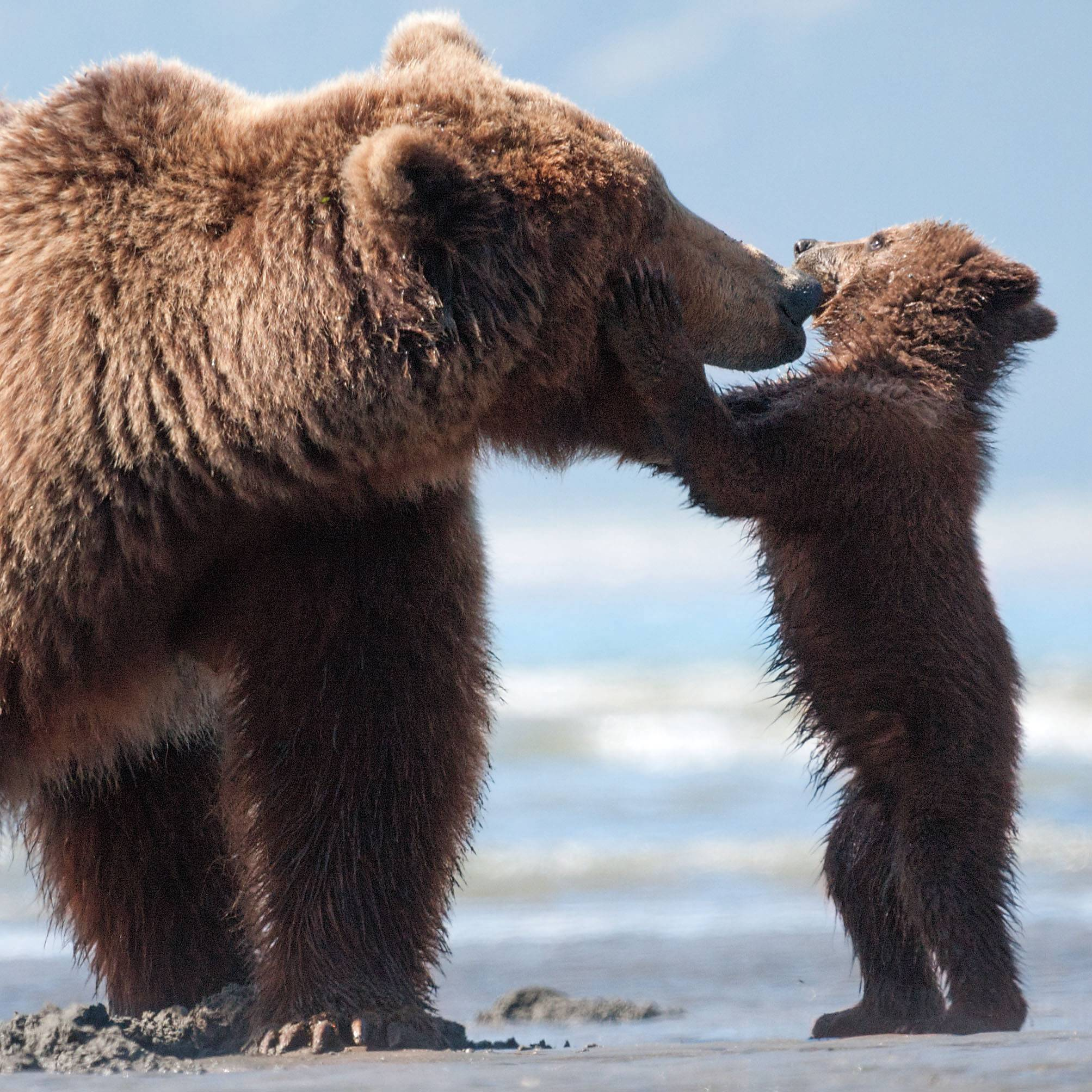 "Sky shares a moment with one of her cubs in ""Bears."""