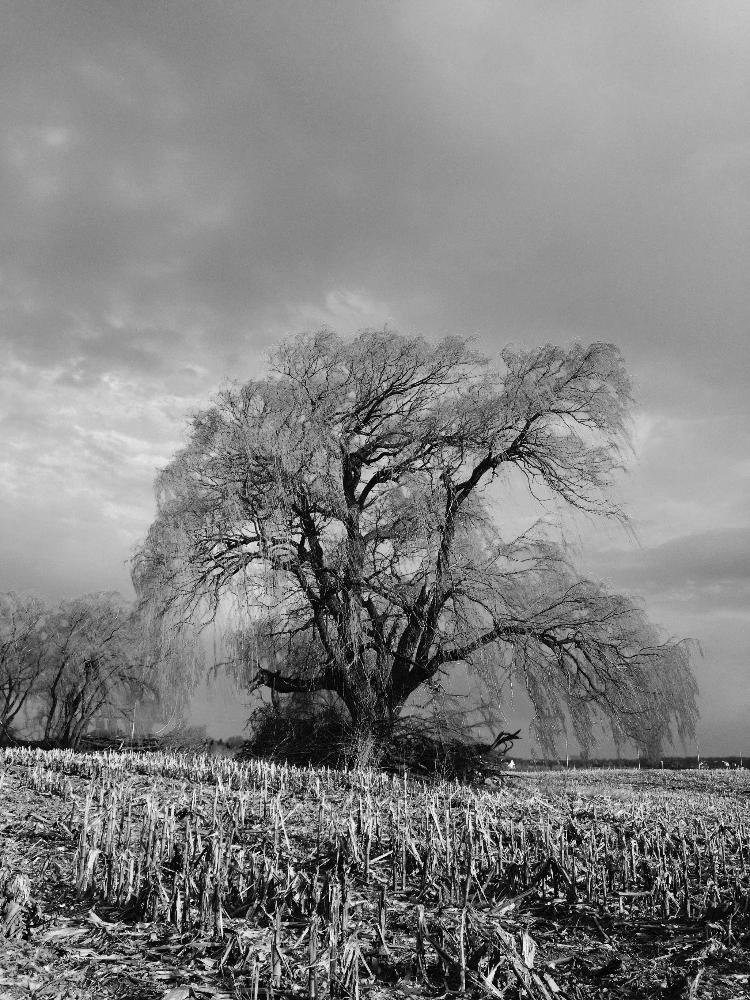 I took this shot on the way home from work. The sun was just coming up and really accenting the tree, while the clouds were moving in from the west ahead of a storm. I liked the contrast between the sun and the clouds and I found it to be even more dramatic in black and white.