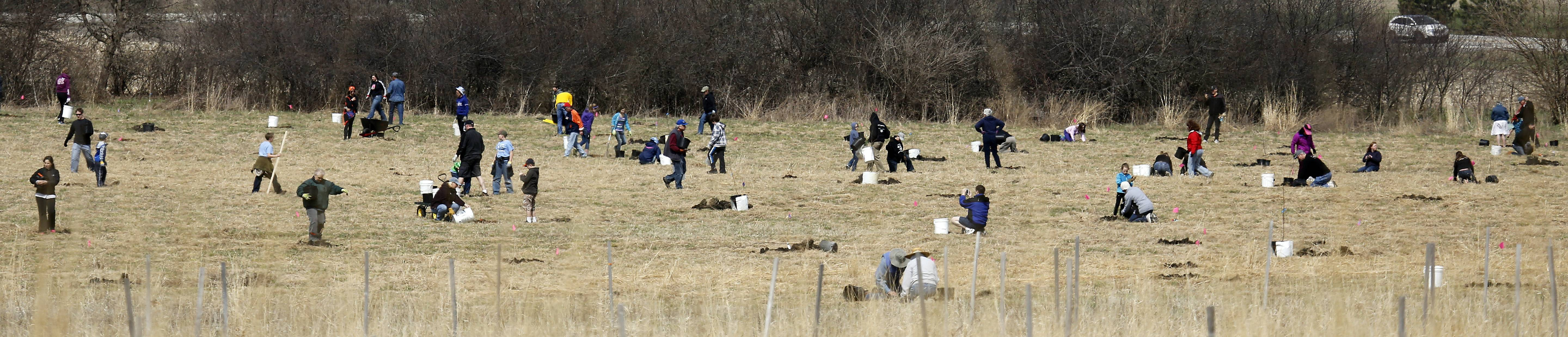 Hundreds of volunteers ventured into Fitchie Creek Forest Preserve in Elgin Saturday to plant some 400 trees in honor of Earth Day.