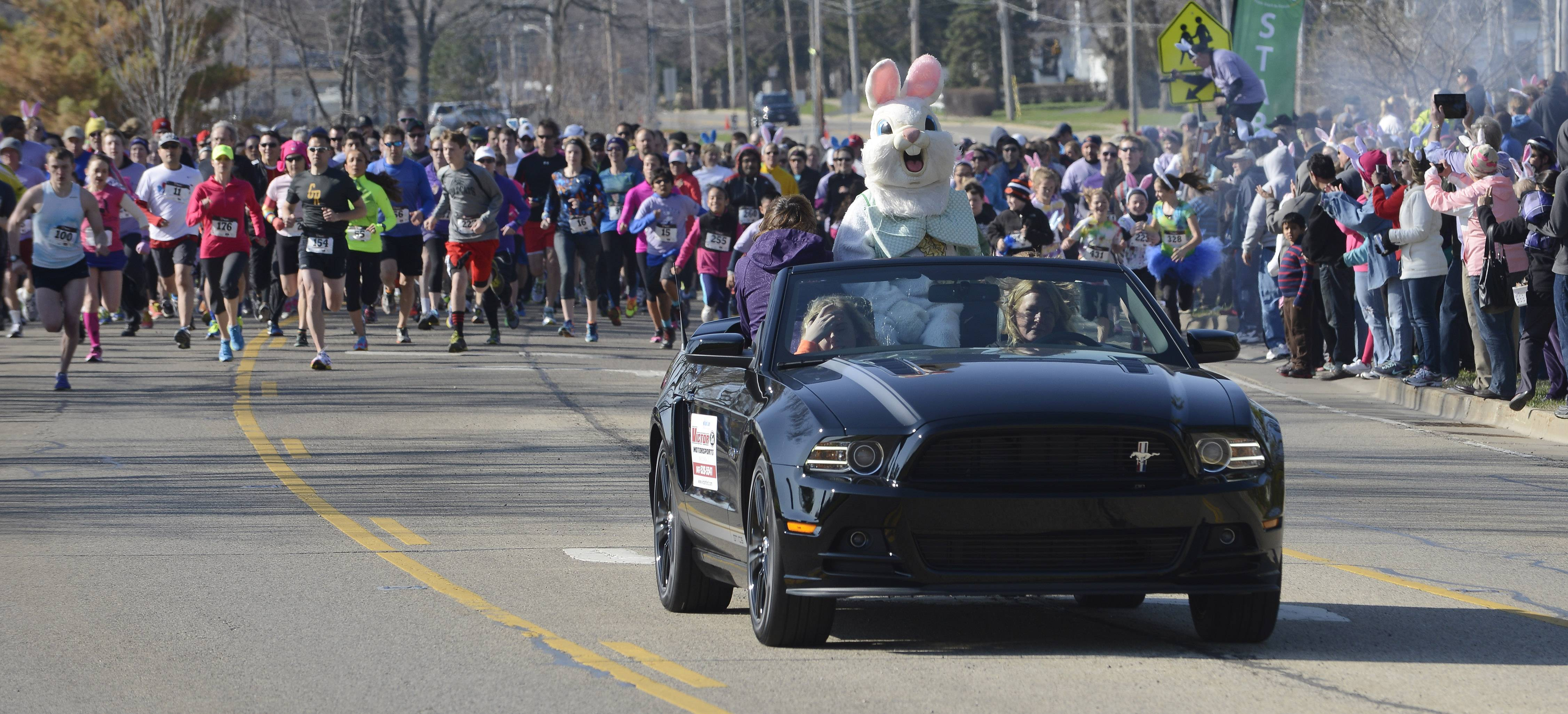 The Easter Bunny leads runners at the start of the third annual Bunny Hop run and walk in Wauconda Saturday.