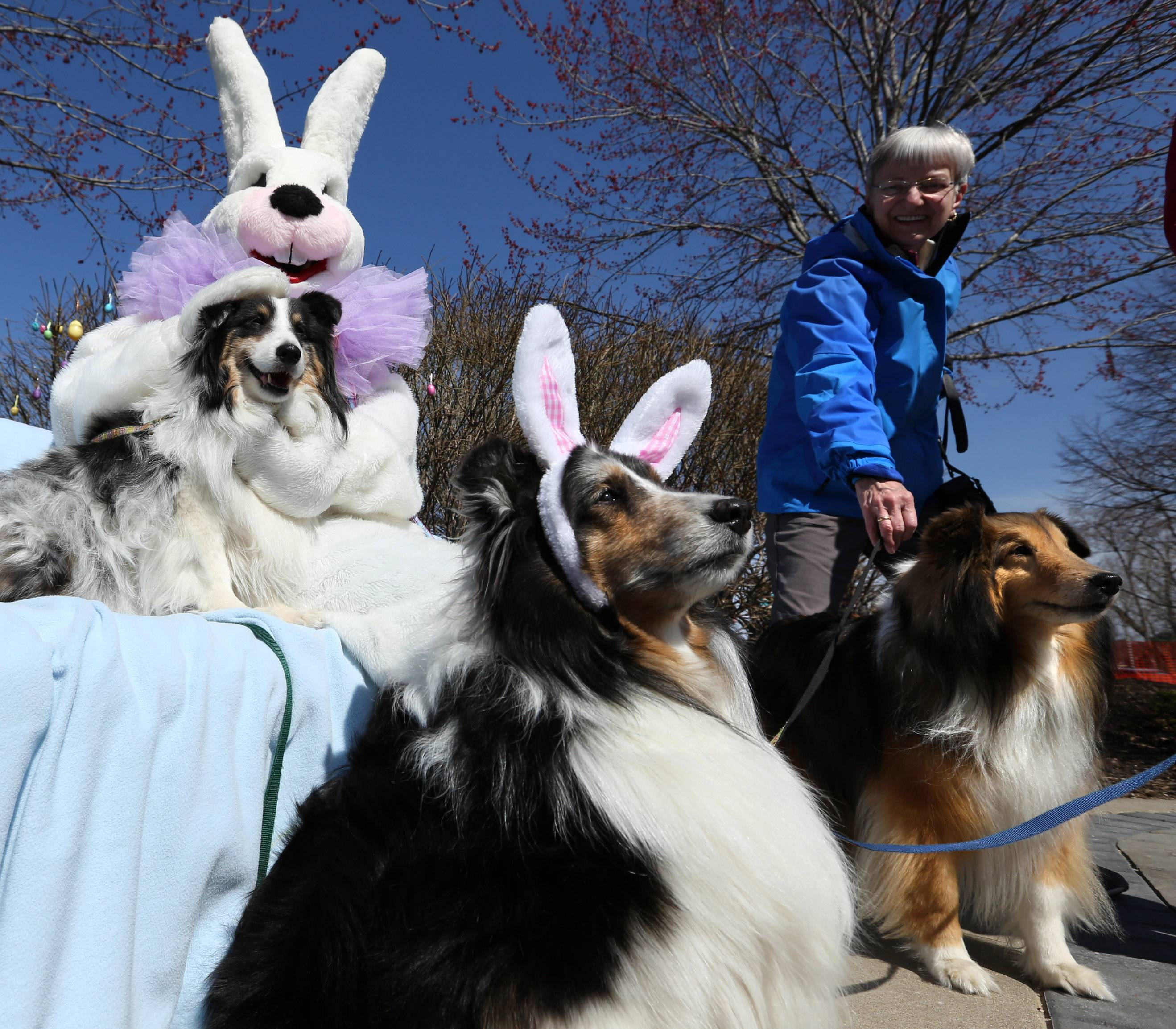 Roberta Russ of Palatine and Rex, 9, on right, pose for photos as Prince, 9, wears rabbit ears and Avery, 6, owned by Terry Meinke of Palatine, is petted by the Easter Bunny at Palatine Park District's annual Hound Egg Hunt at Towne Square on Saturday.
