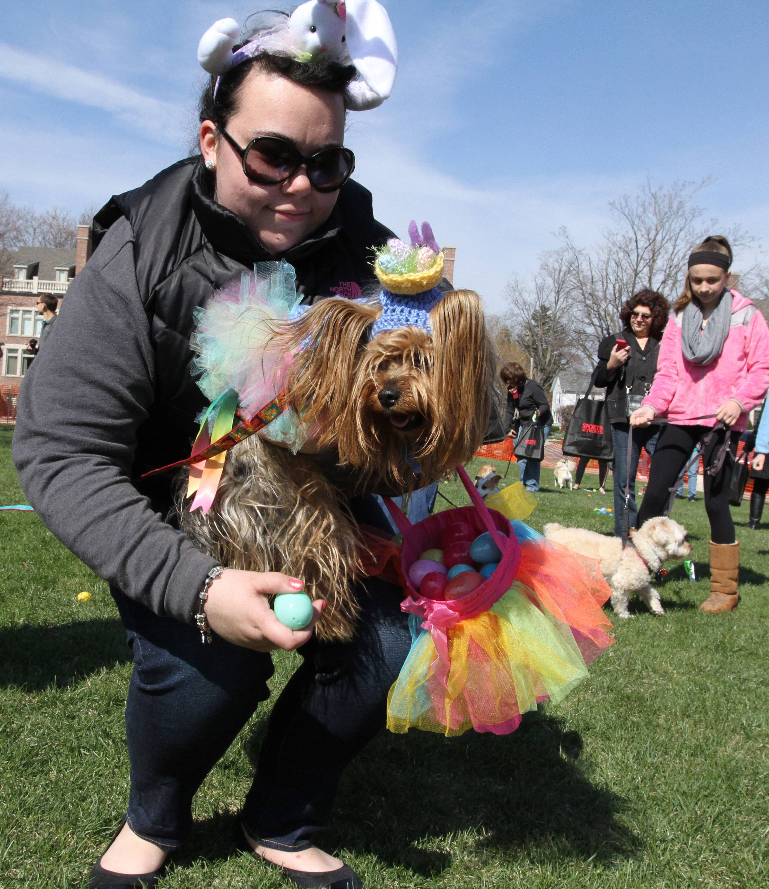 Angelica Dinzburg of Glenview picks up plastic eggs filled with dog treats with her dog, Cookie, a 3-year-old Yorkie at Palatine Park District's annual Hound Egg Hunt at Towne Square on Saturday.
