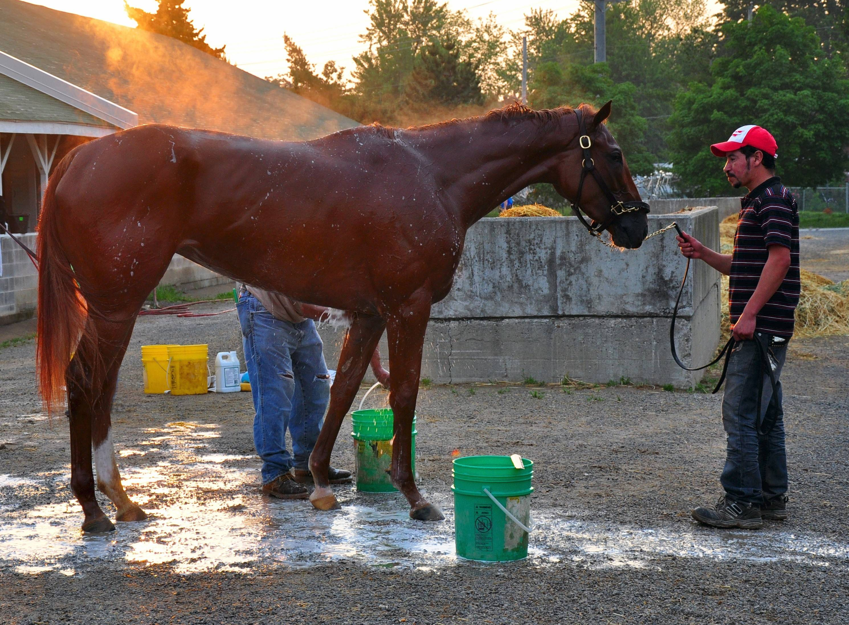 Visitors on the Barn and Backside tour at Churchill Downs may see horses being washed down after an early morning workout.