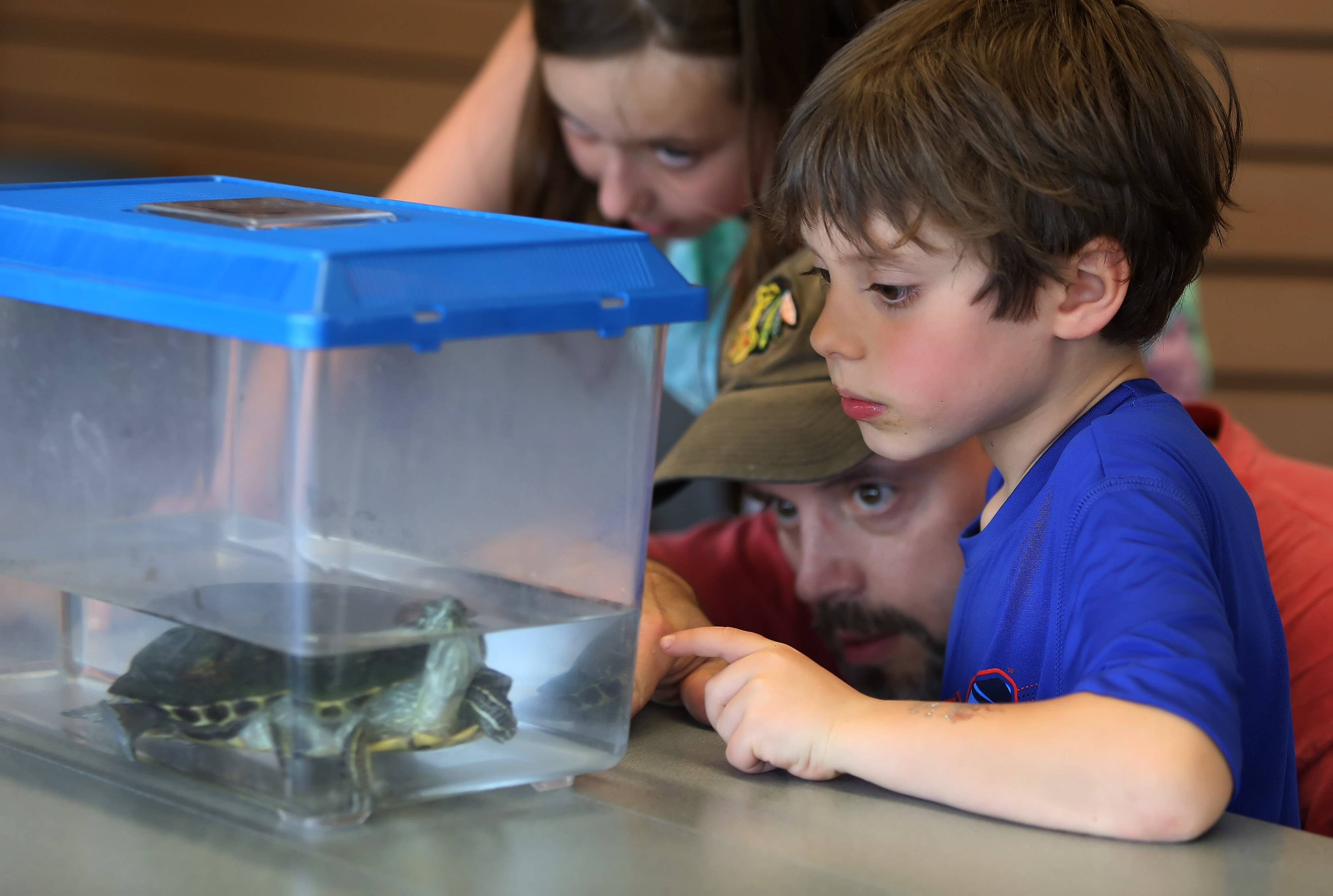 Five-year-old Nathan Mroczek of Lincolnshire looks at a red-eared slider turtle with is father, Tony, and sister, Leia, 10, during the Greet Education Animals program Sunday hosted by the Lake County Forest Preserve District at Ryerson Conversation Area near Riverwoods. The event kicked off a week of programs celebrating Earth Day.