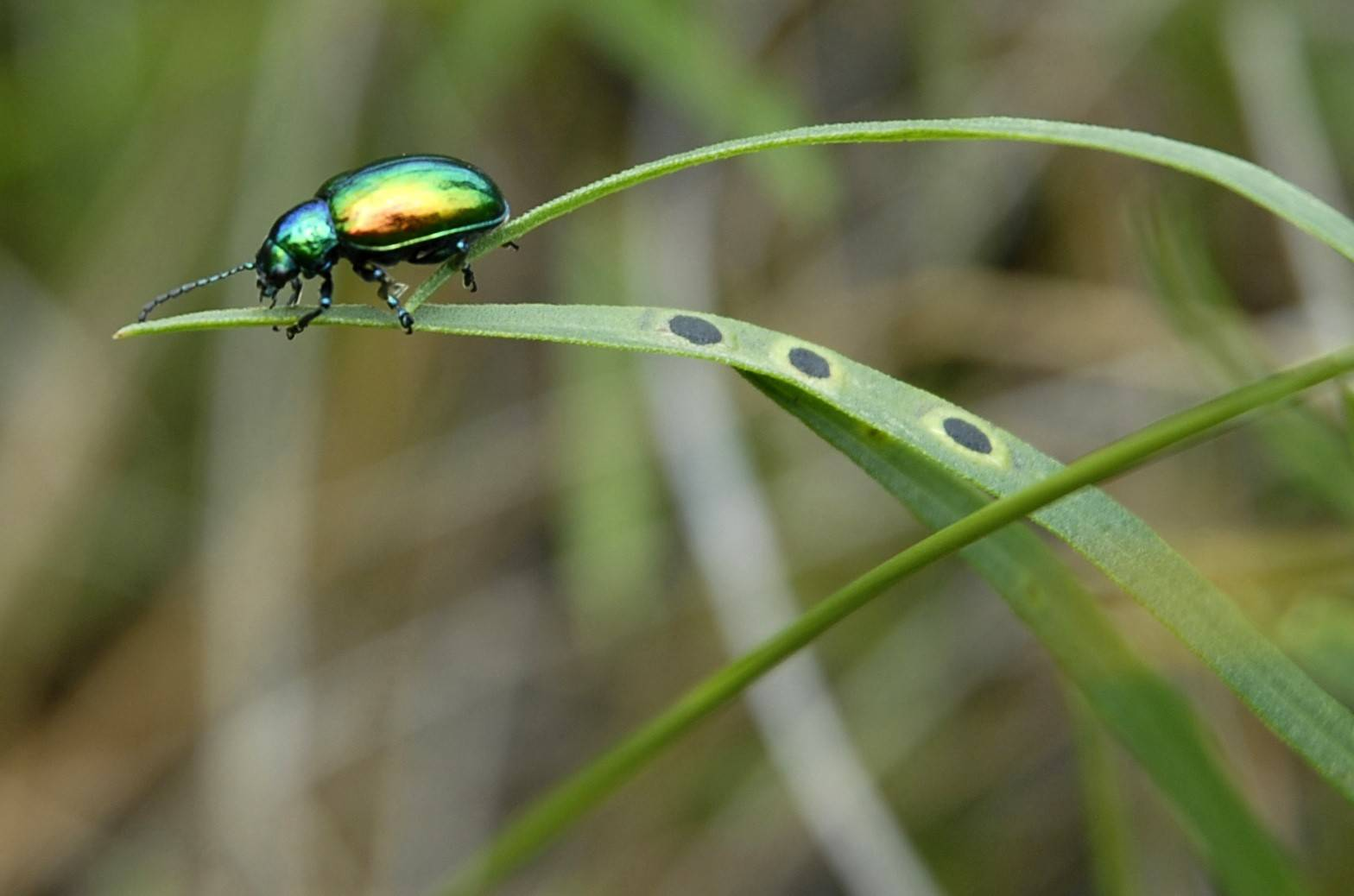 The cold winter may have reduced the number of Japanese beetles. Overall, however, experts say this year's brutal winter won't have lingering effects on suburban plants and wildlife.